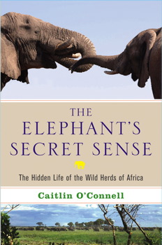 The Elephant's Secret Sense