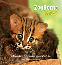 ZooBorns Cats!
