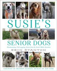 essays < pets on simon schuster available for now susie s senior dogs