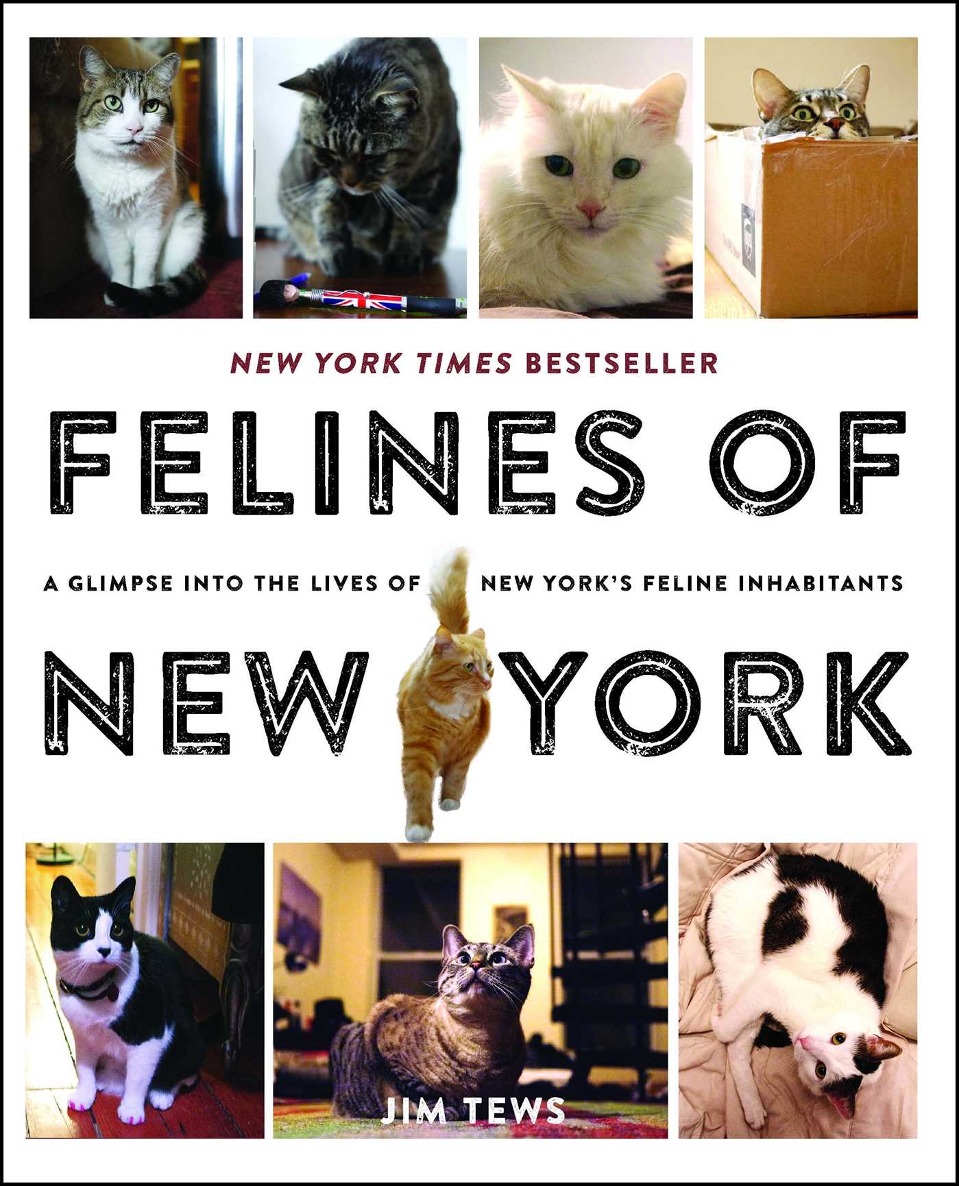 Felines of new york 9781501125836 hr