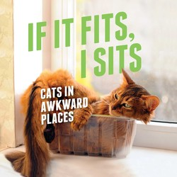If It Fits, I Sits book cover