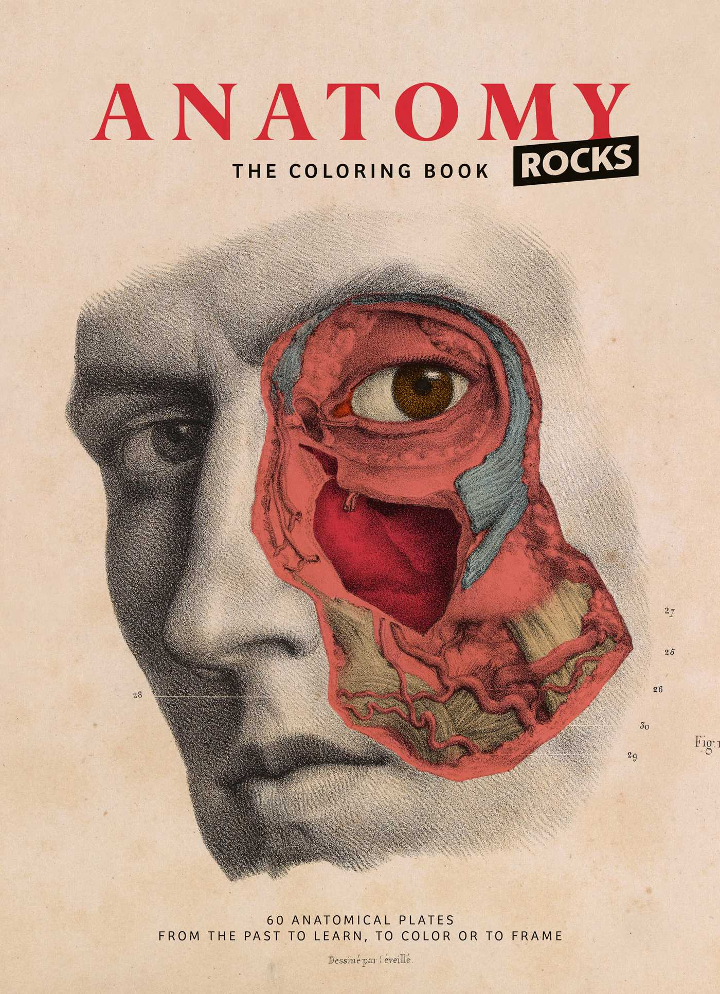 Anatomy coloring book | Book by Lachat | Official Publisher Page ...