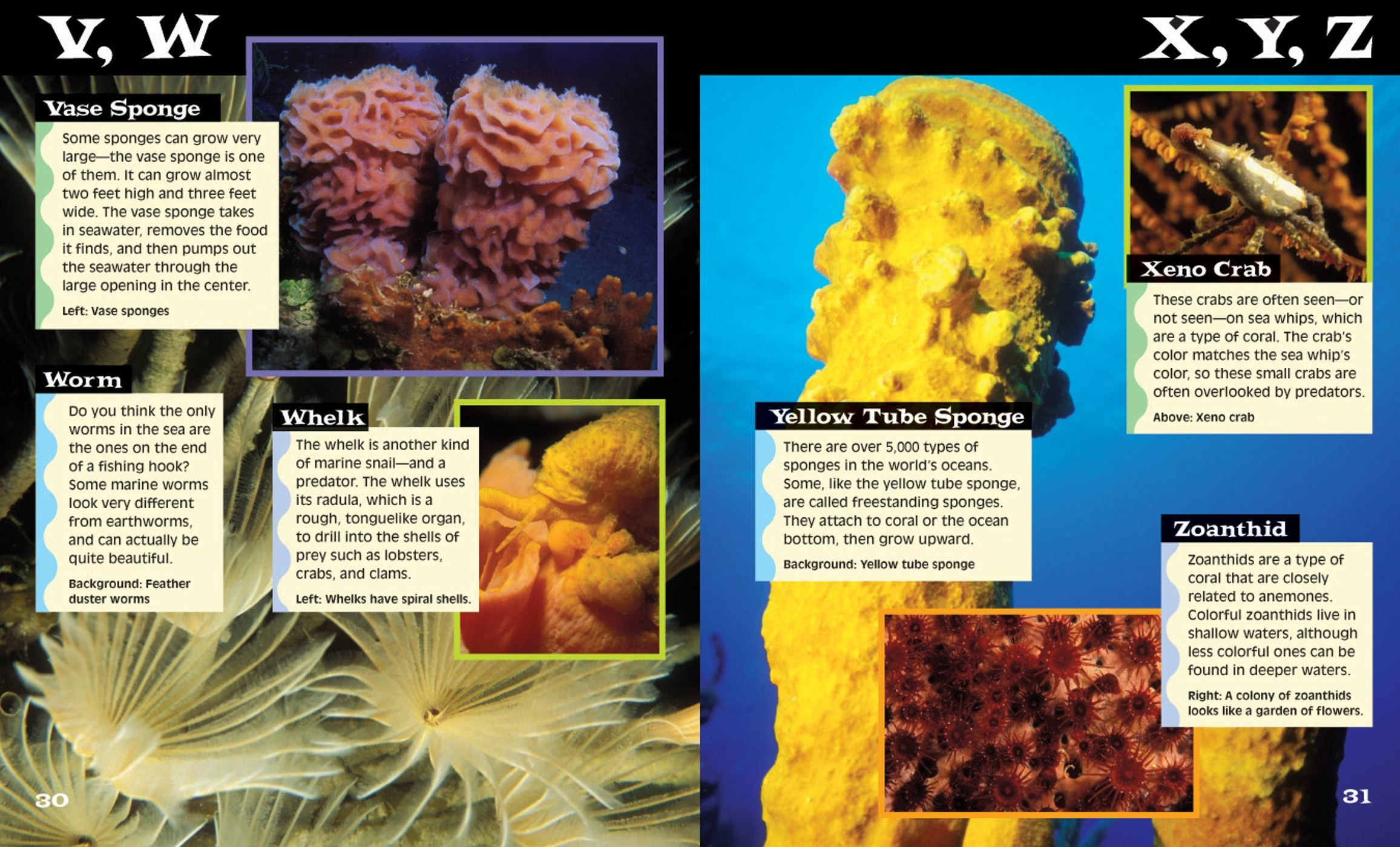 Ocean-life-from-a-to-z-book-and-dvd-9780794412227.in02