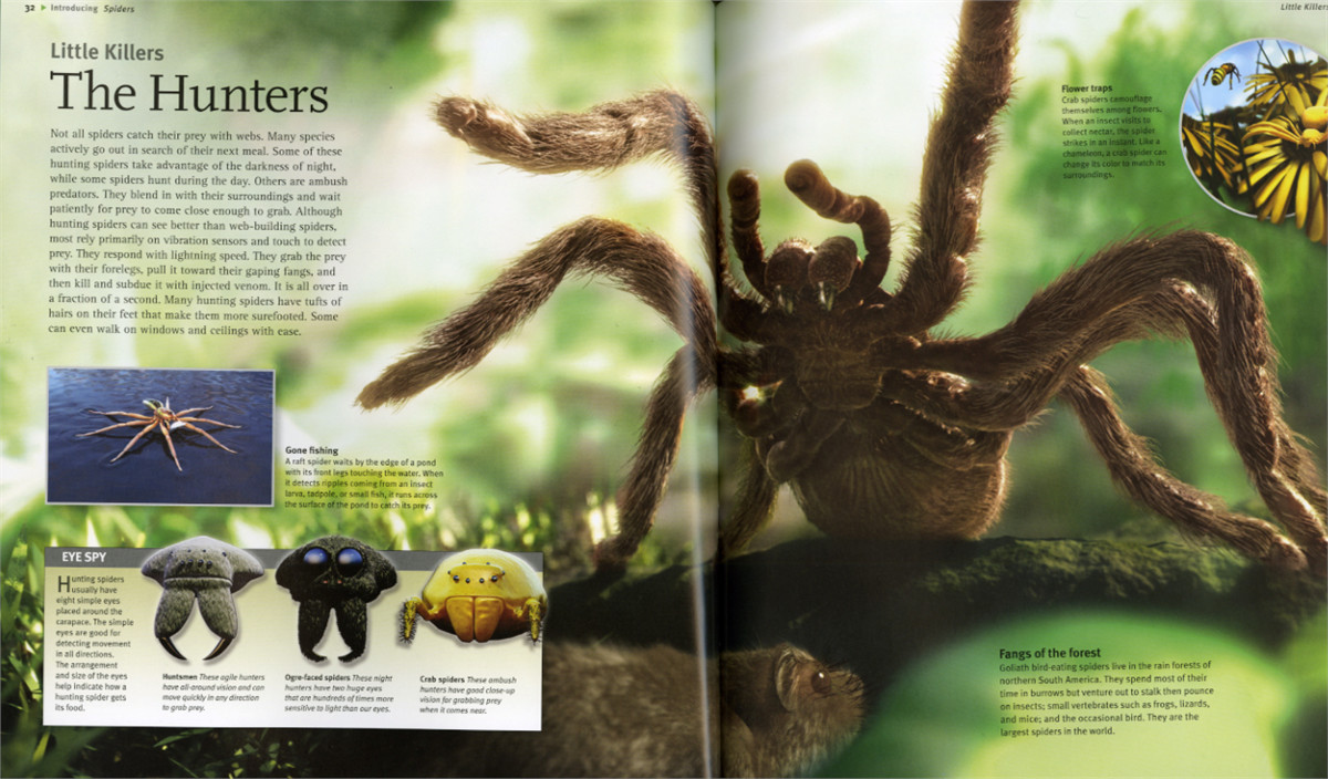 Insects-spiders-9781416938682.in03