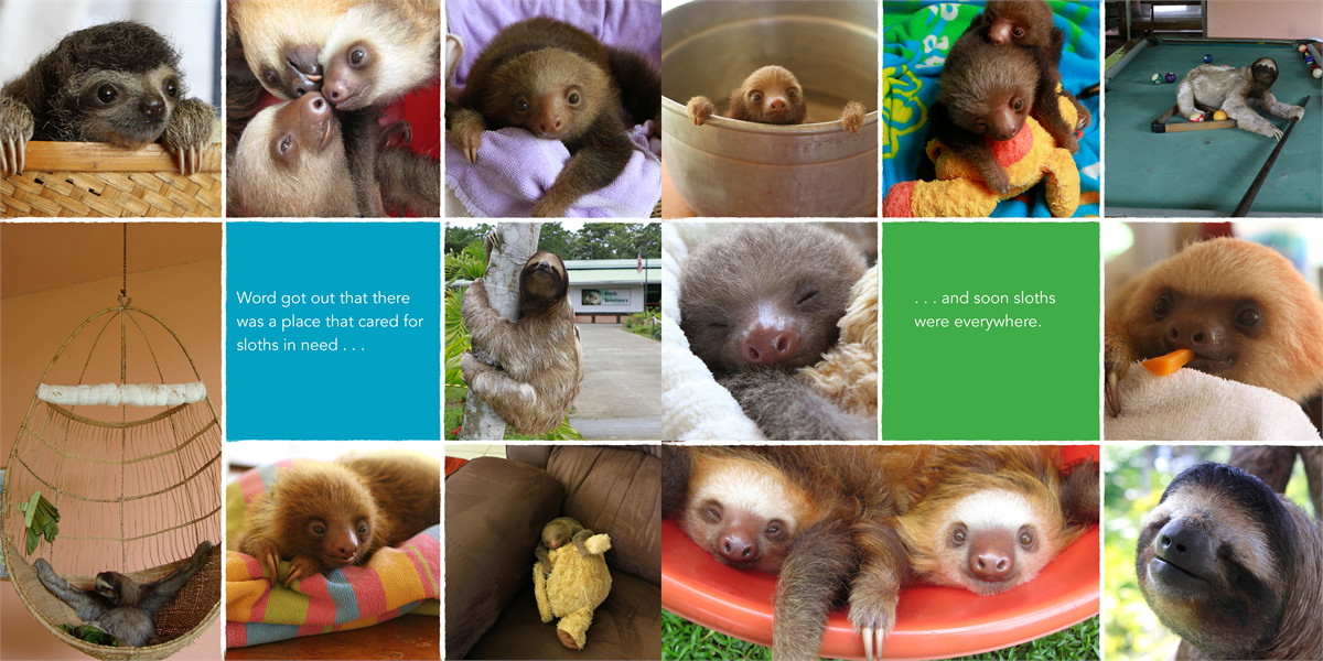 A little book of sloth 9781442445574.in02