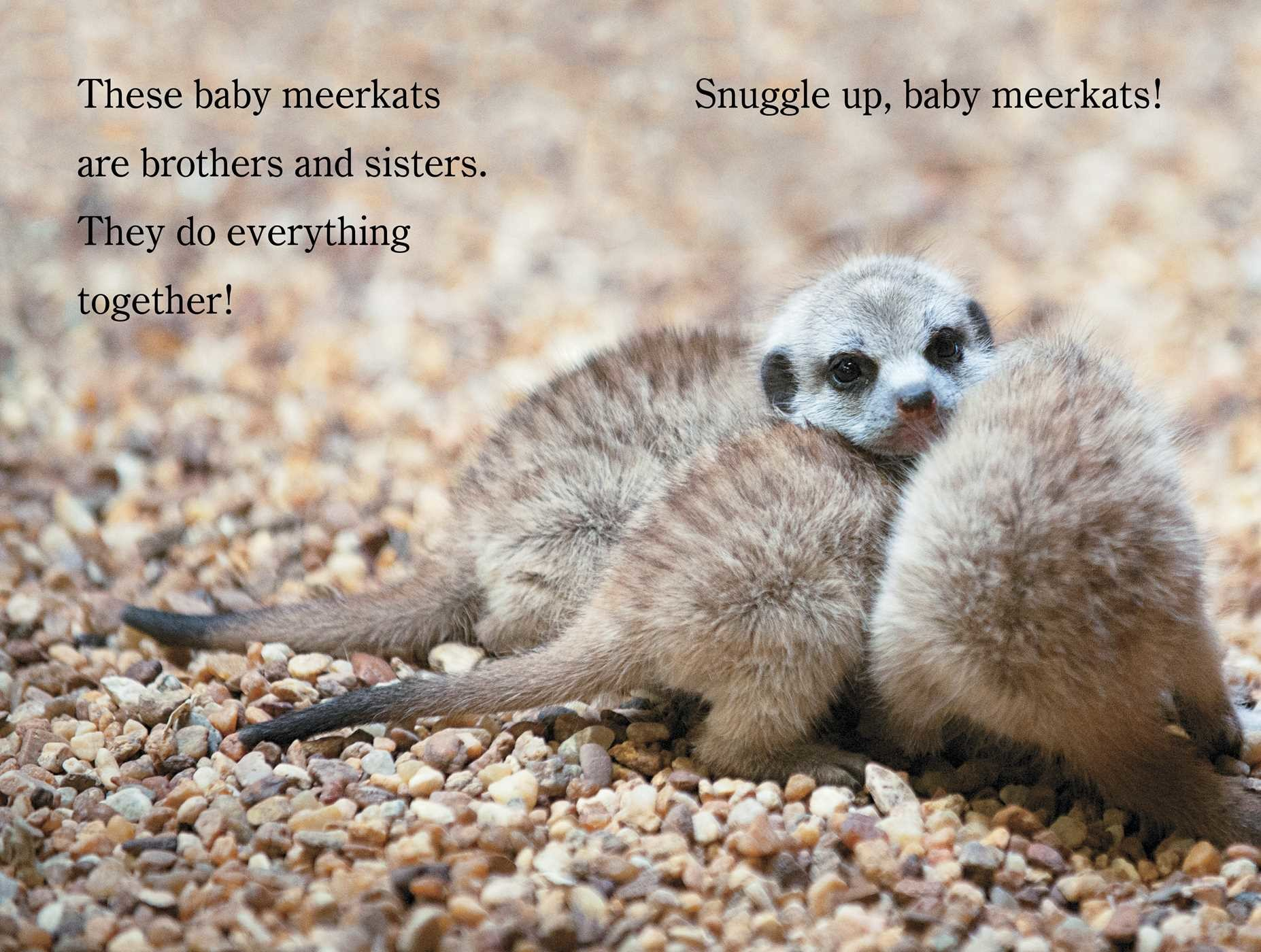 Snuggle up zooborns 9781481431002.in02