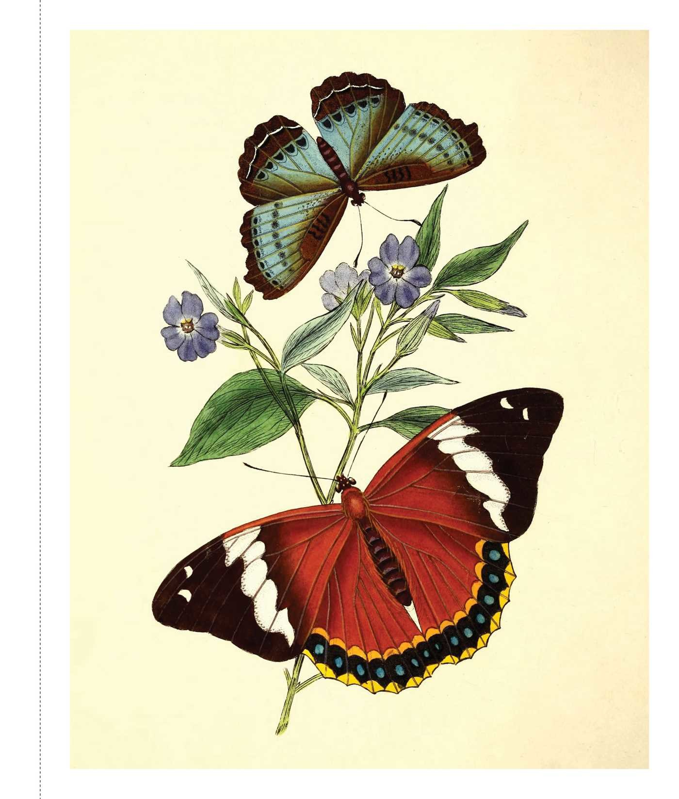 instant wall art butterfly botanical prints