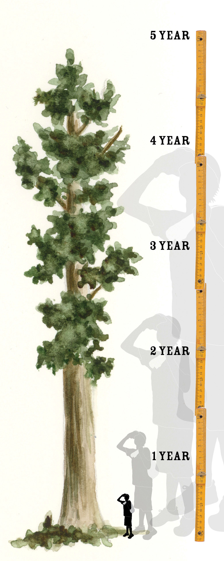 Grow your own giant sequoia 9781604331431.in01