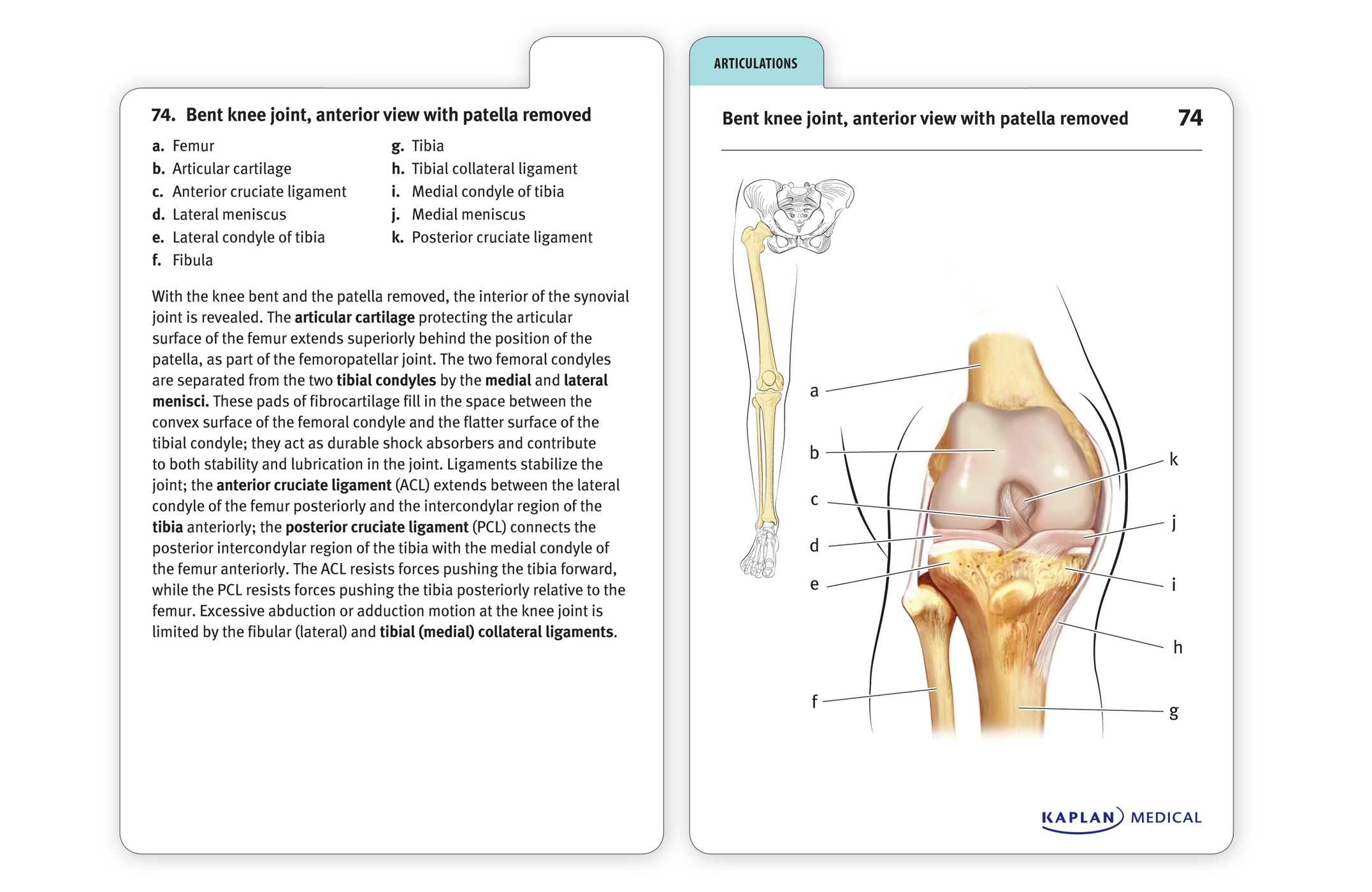 Anatomy-flashcards-9781607149842.in04