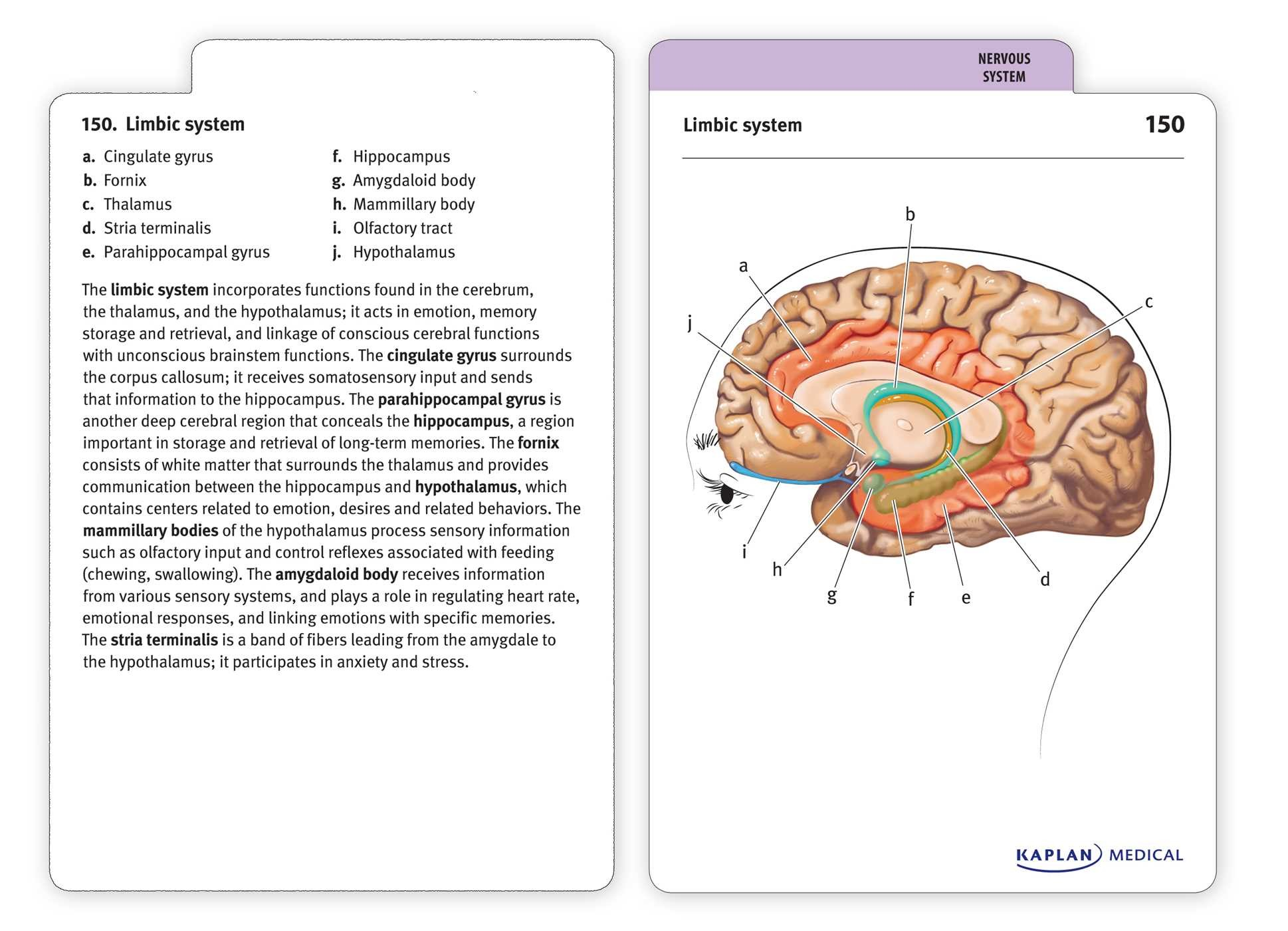 Anatomy-flashcards-9781607149842.in05