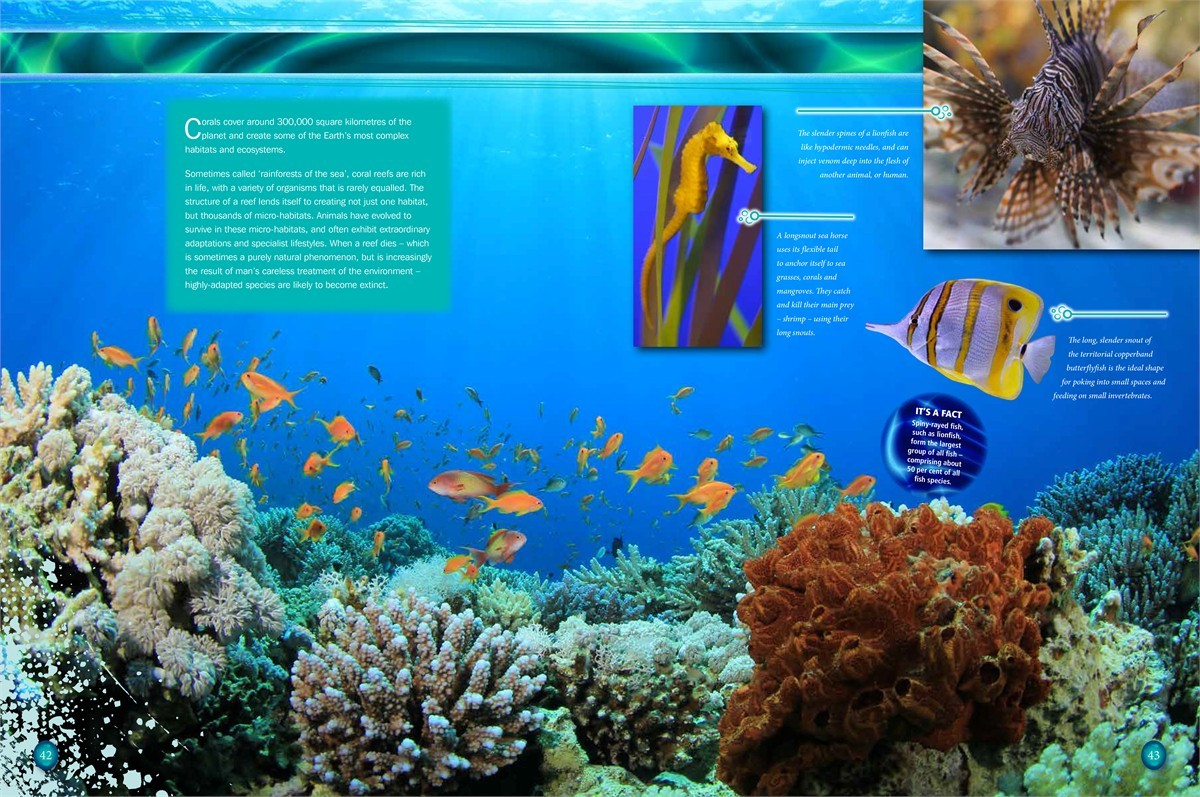 Fish aquarium in canada -  Ripleys Aquarium Of Canada 9781609911072 In02