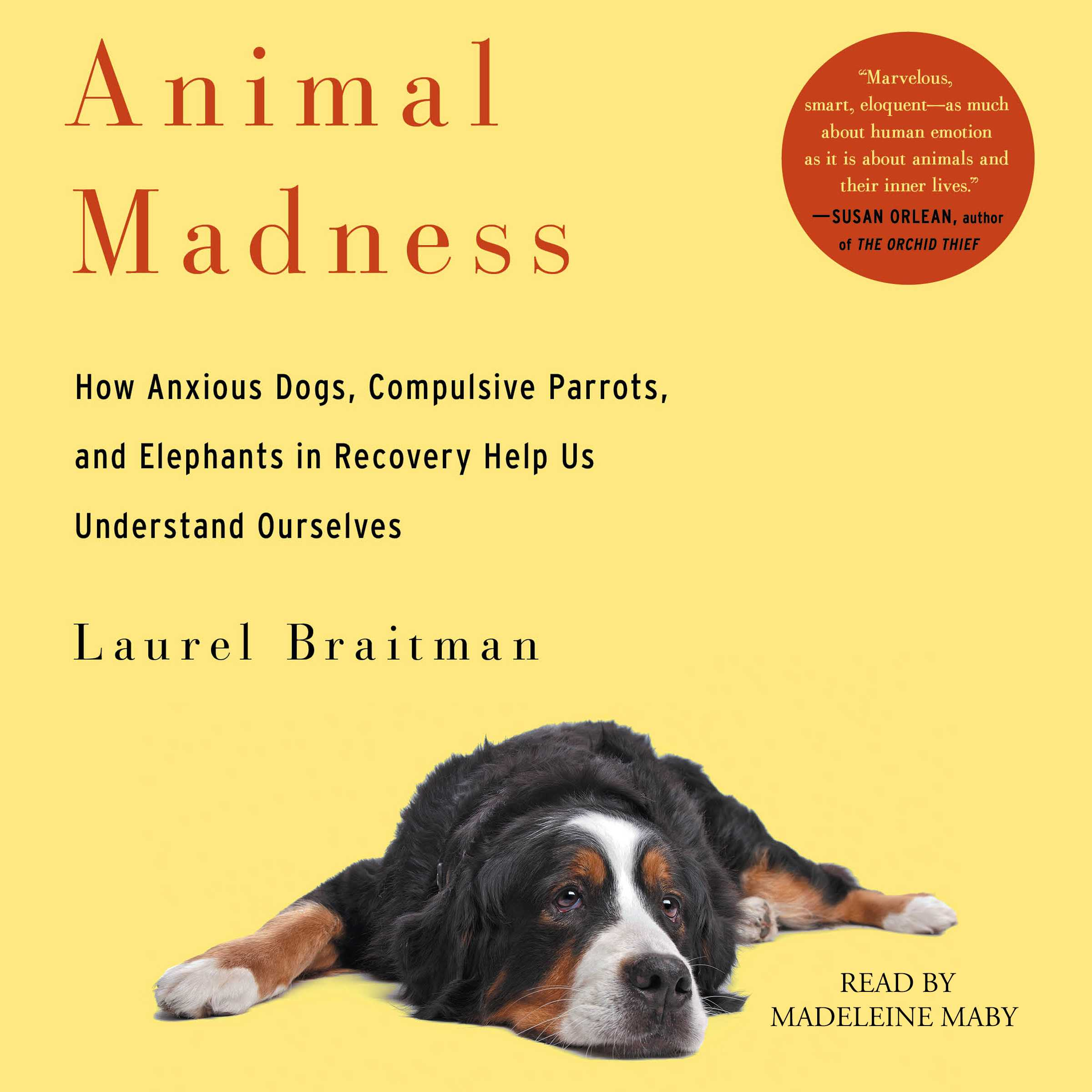 Animal-madness-9781442371354_hr