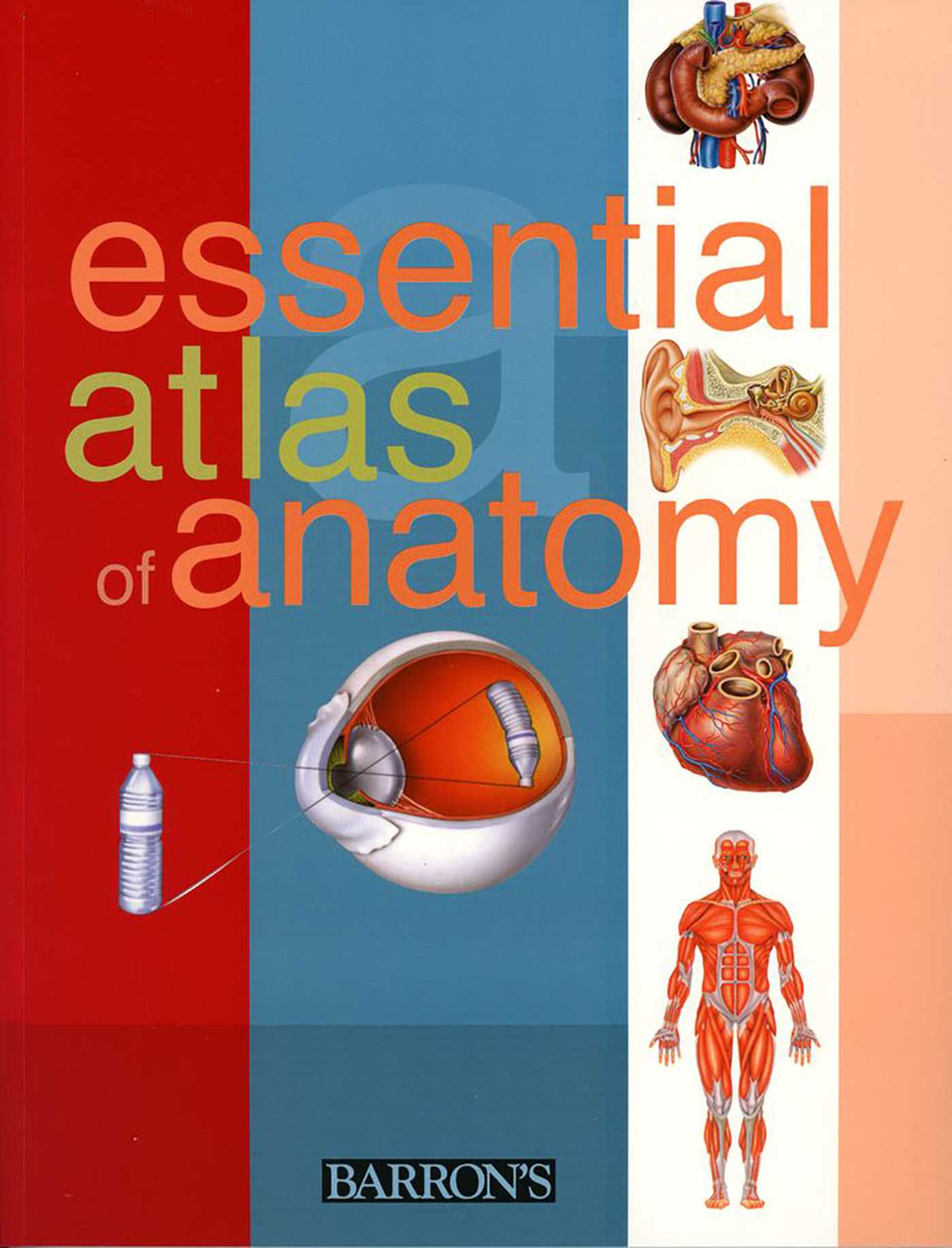 Essential Atlas Of Anatomy Book By Parramon Studios Official