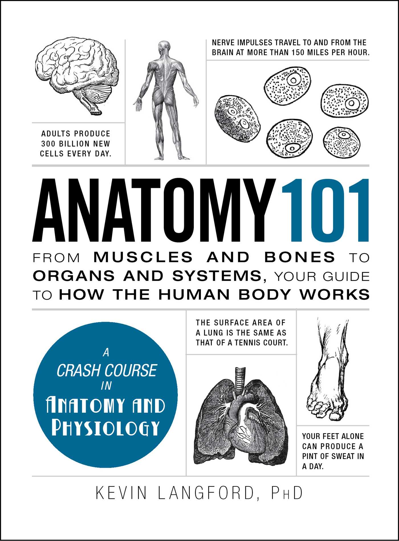 Anatomy 101 | Book by Kevin Langford | Official Publisher Page ...