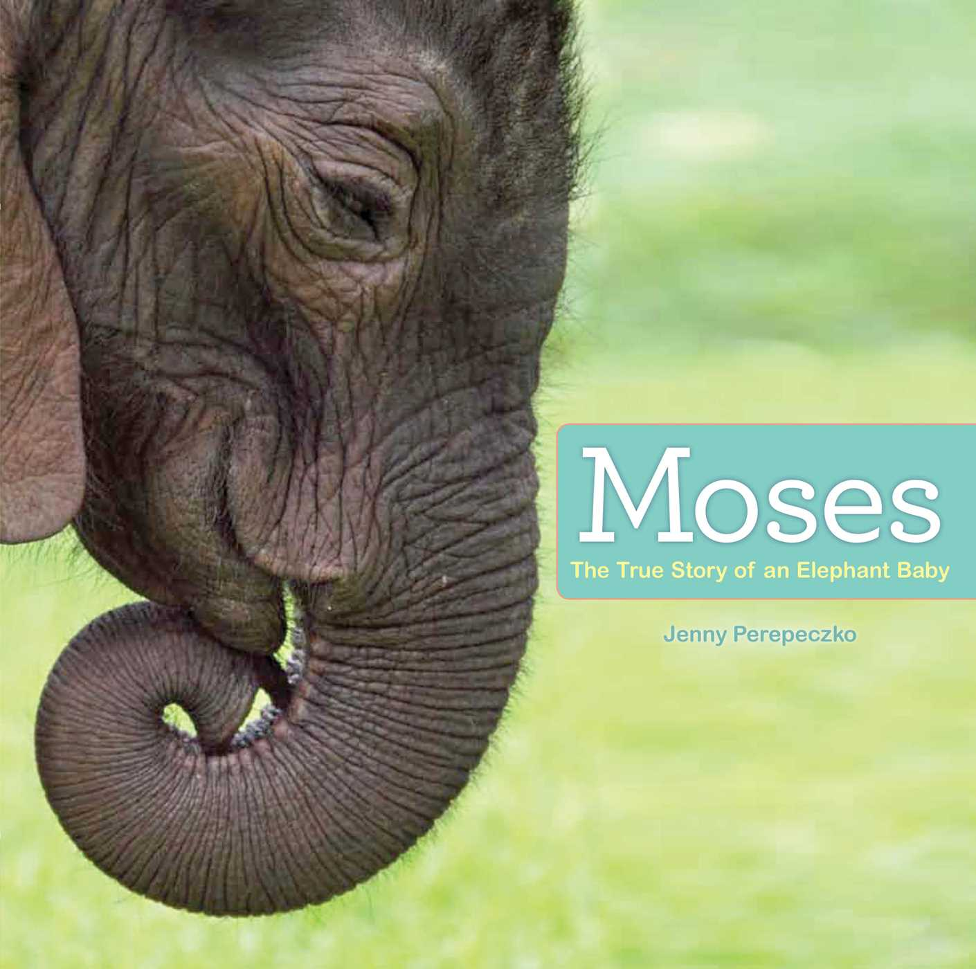 Moses book 8