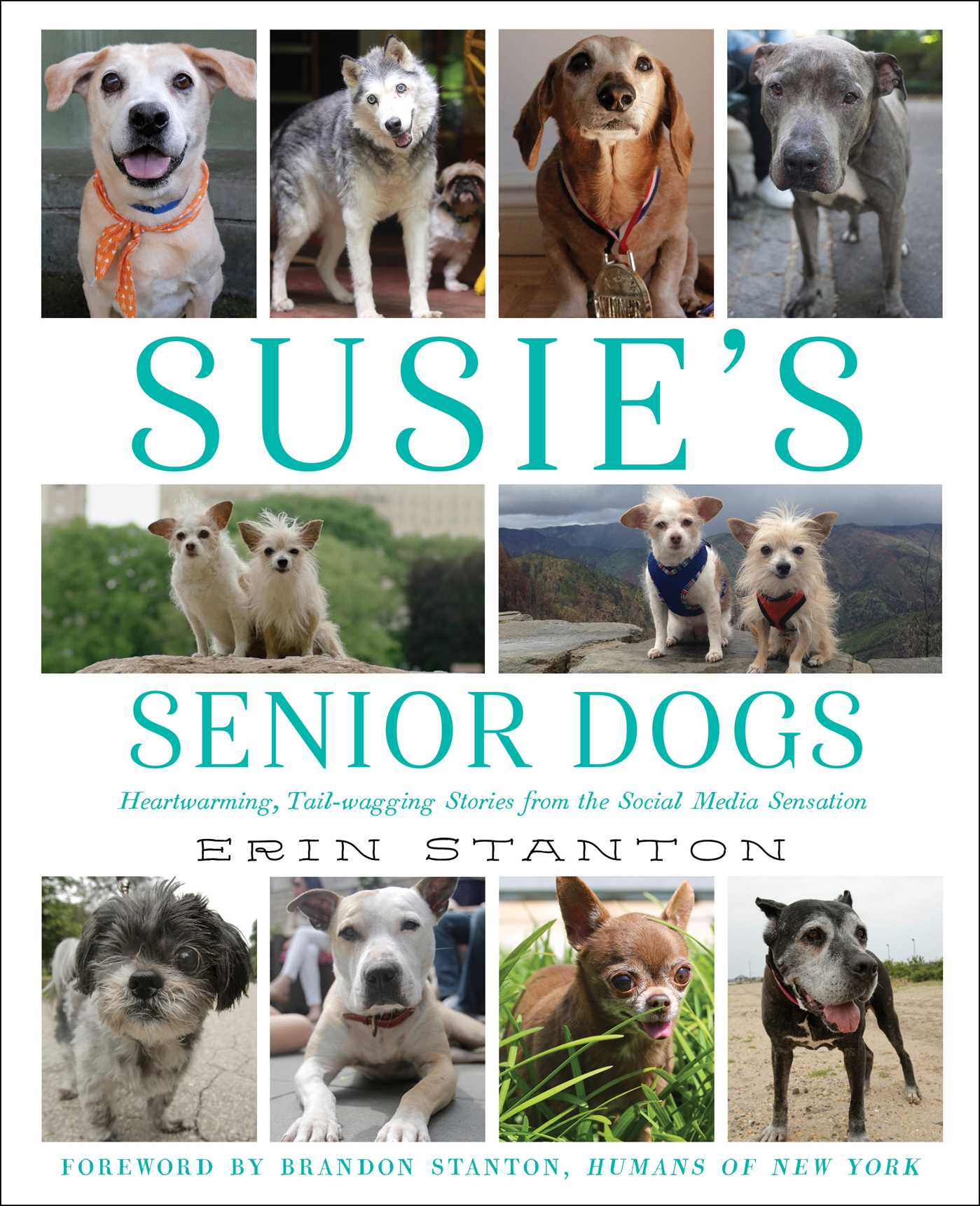 Susie's Senior Dogs book cover