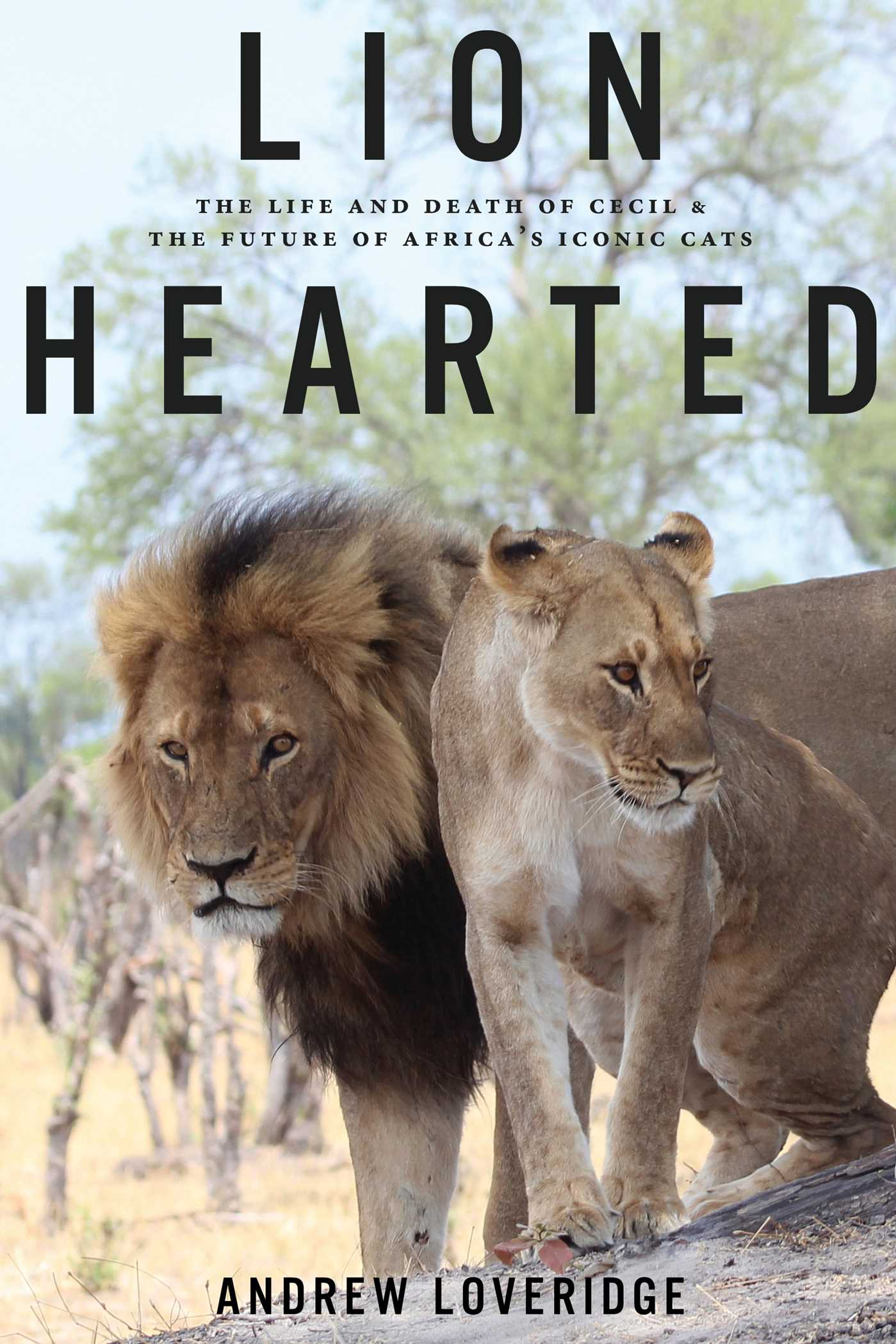 lion hearted book by andrew loveridge official