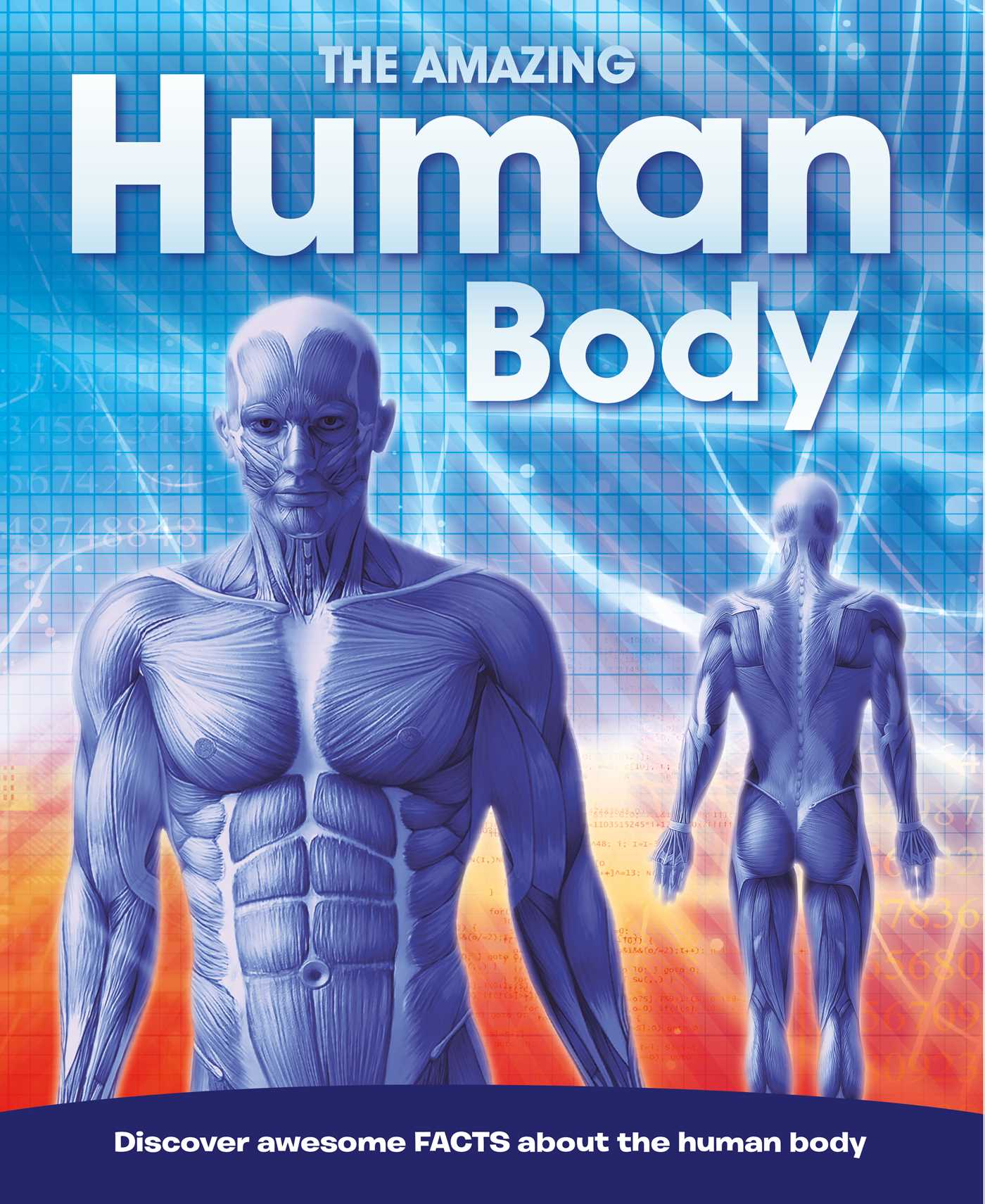 The Amazing Human Body Book By Igloobooks Official Publisher