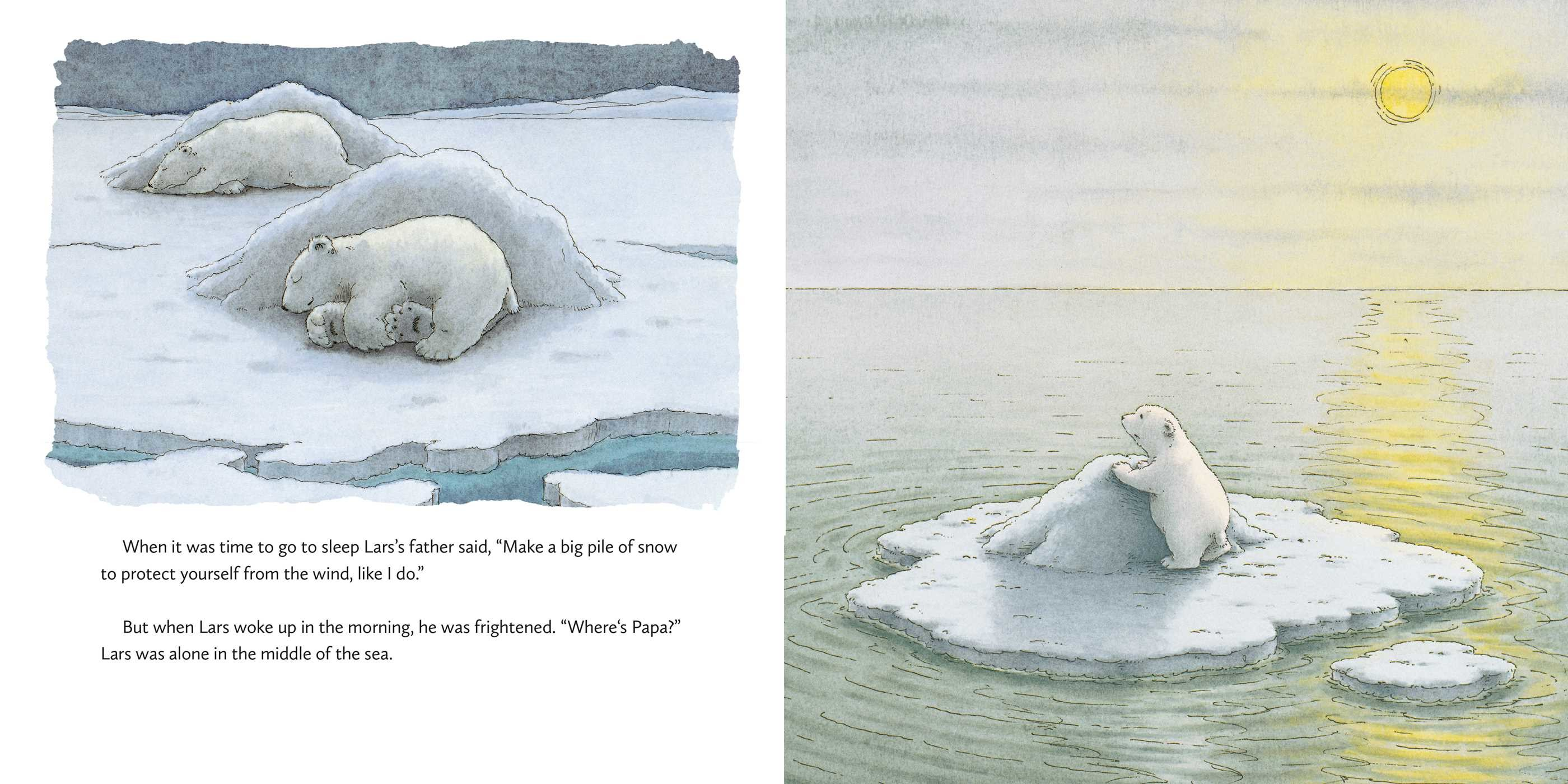 The little polar bear board book 9780735843165.in02