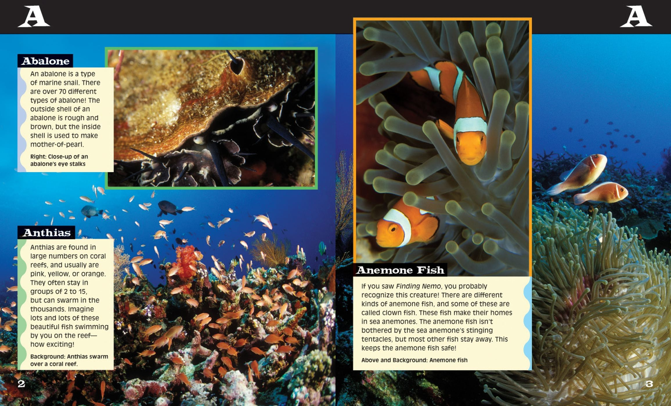 Ocean Life From A to Z Book and DVD Book by Cynthia