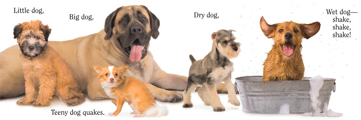 Dog 9781416941378.in04