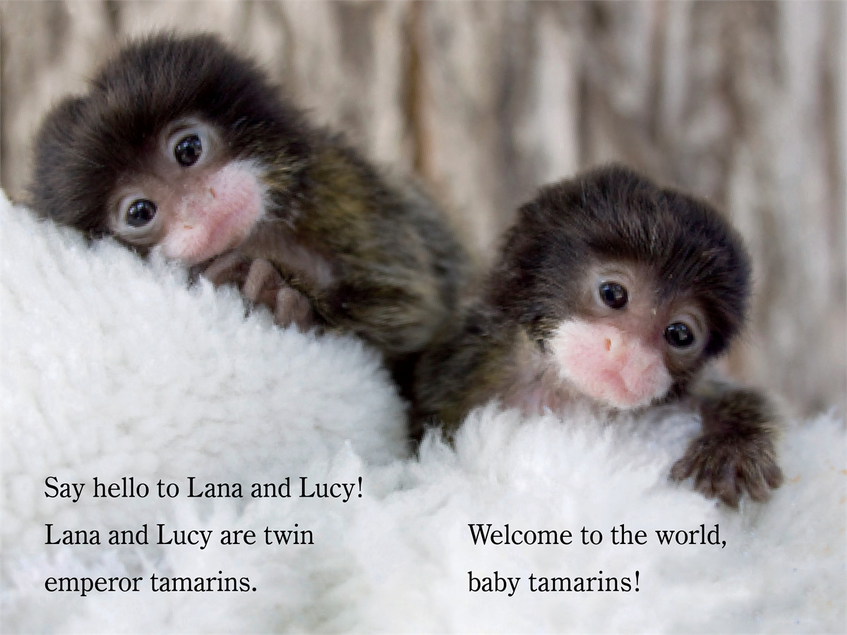Welcome to the world zooborns! 9781442443778.in01