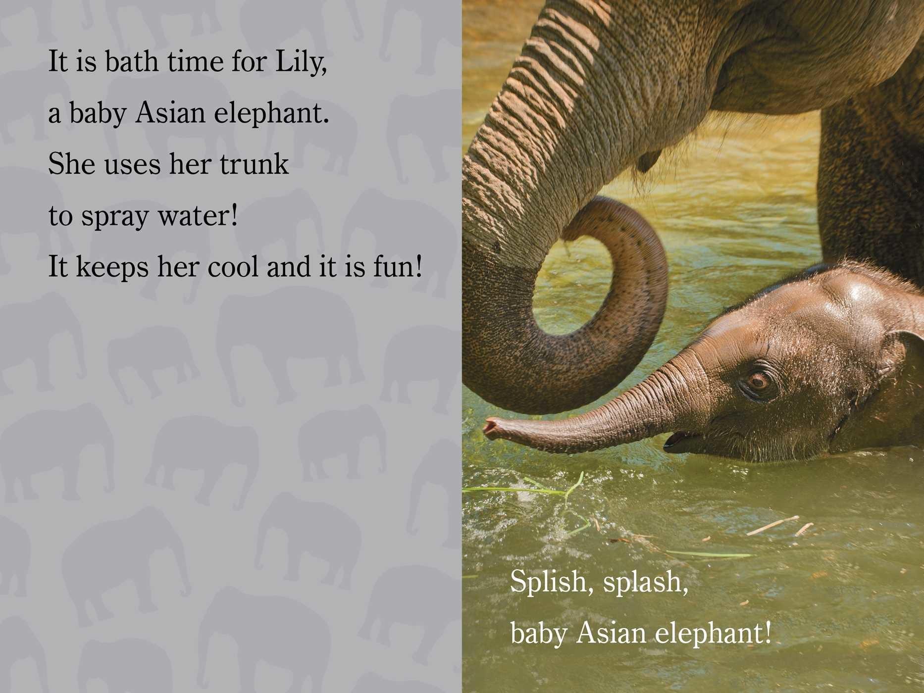 Splish splash zooborns 9781481430975.in03