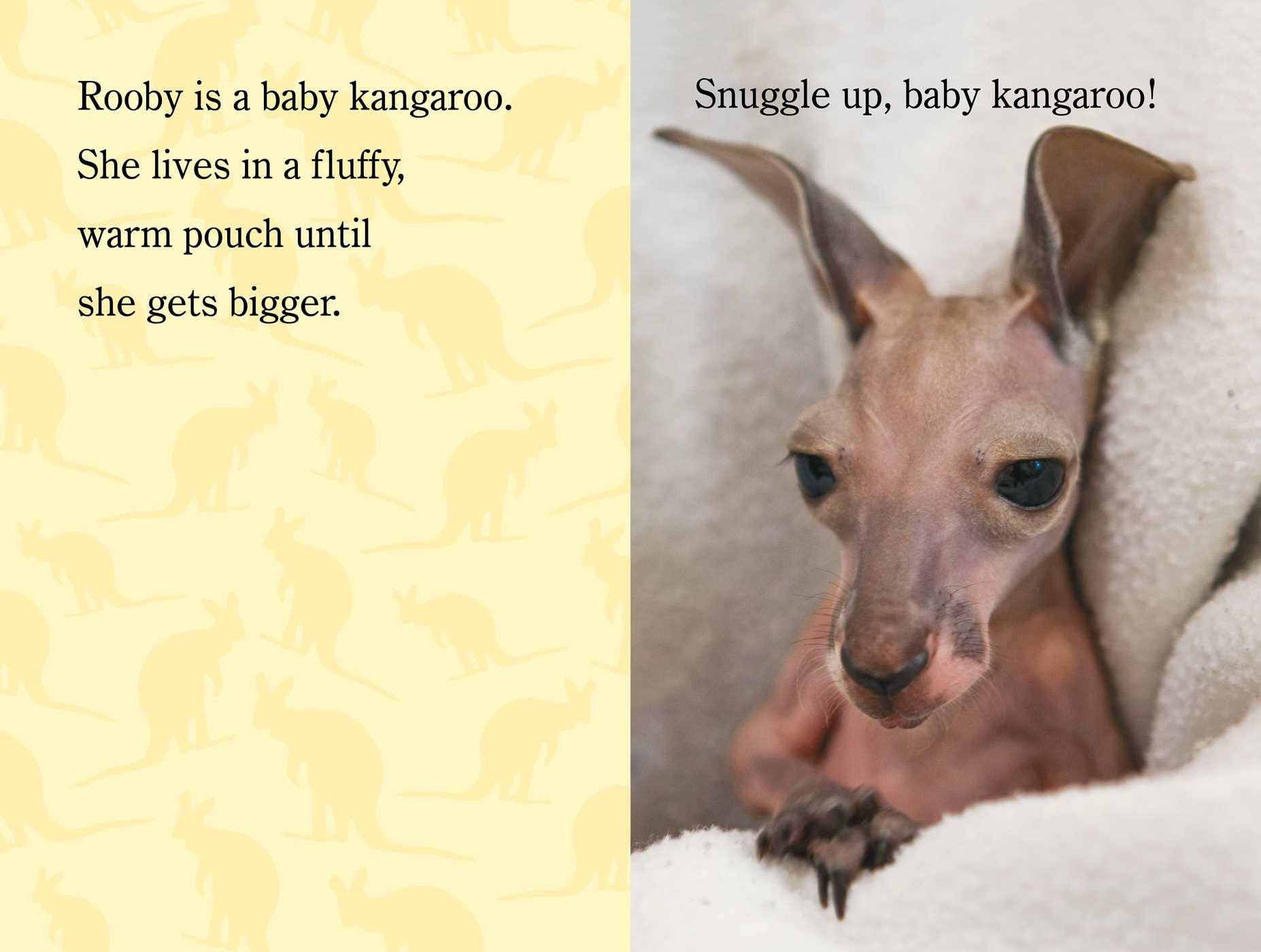 Snuggle up zooborns 9781481431002.in03