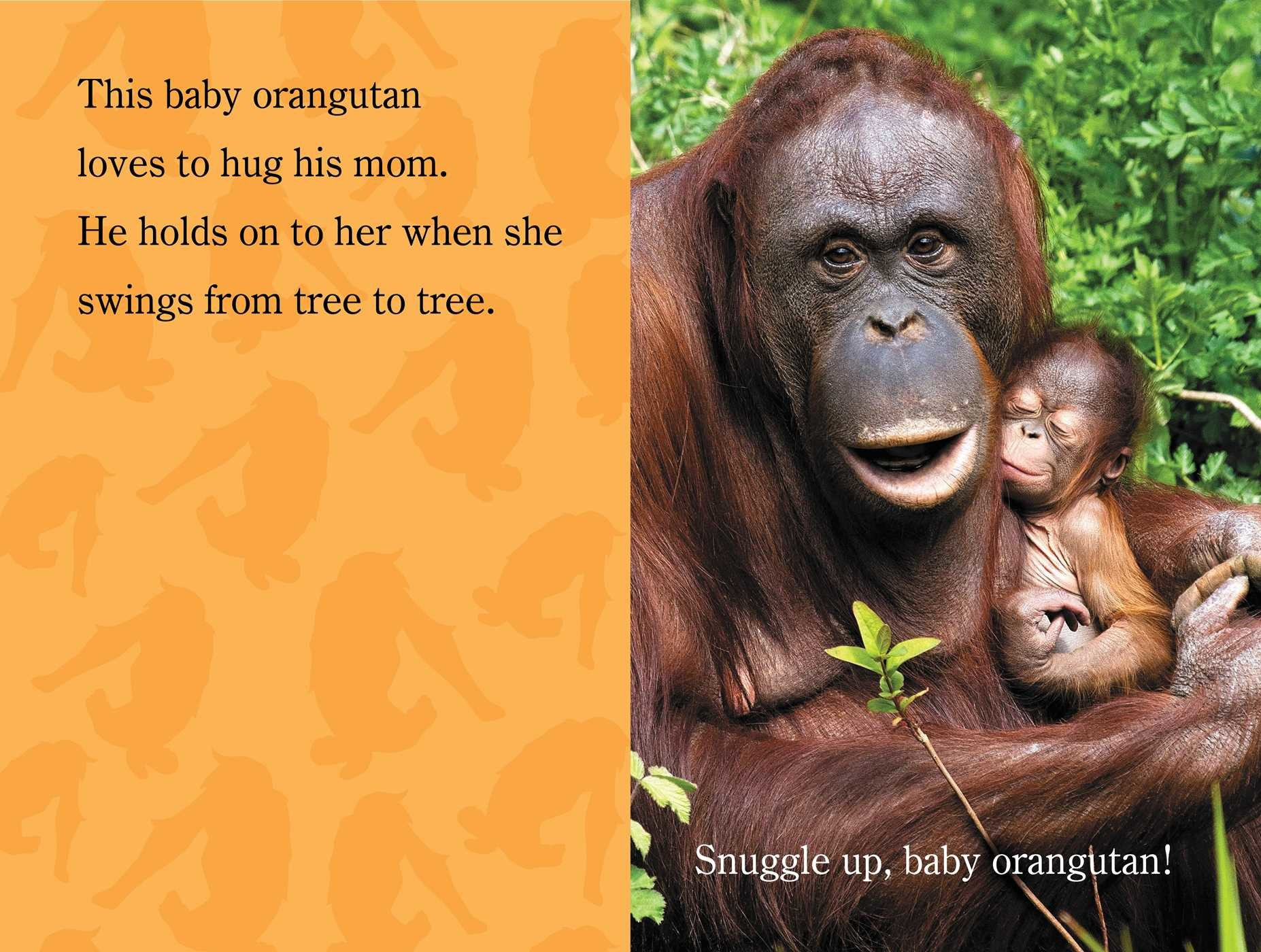 Snuggle up zooborns 9781481431002.in05