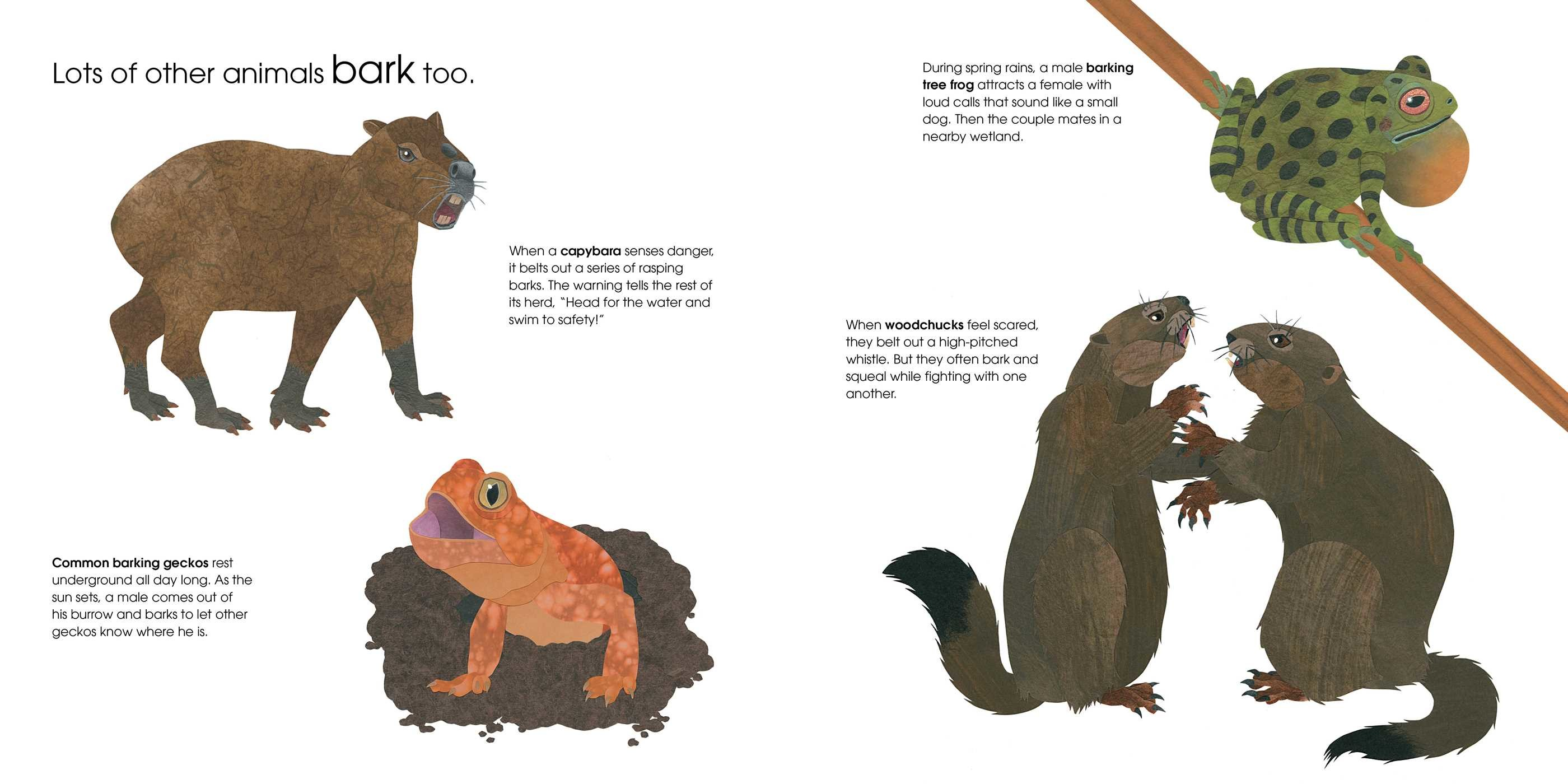 Can an aardvark bark 9781481458528.in02