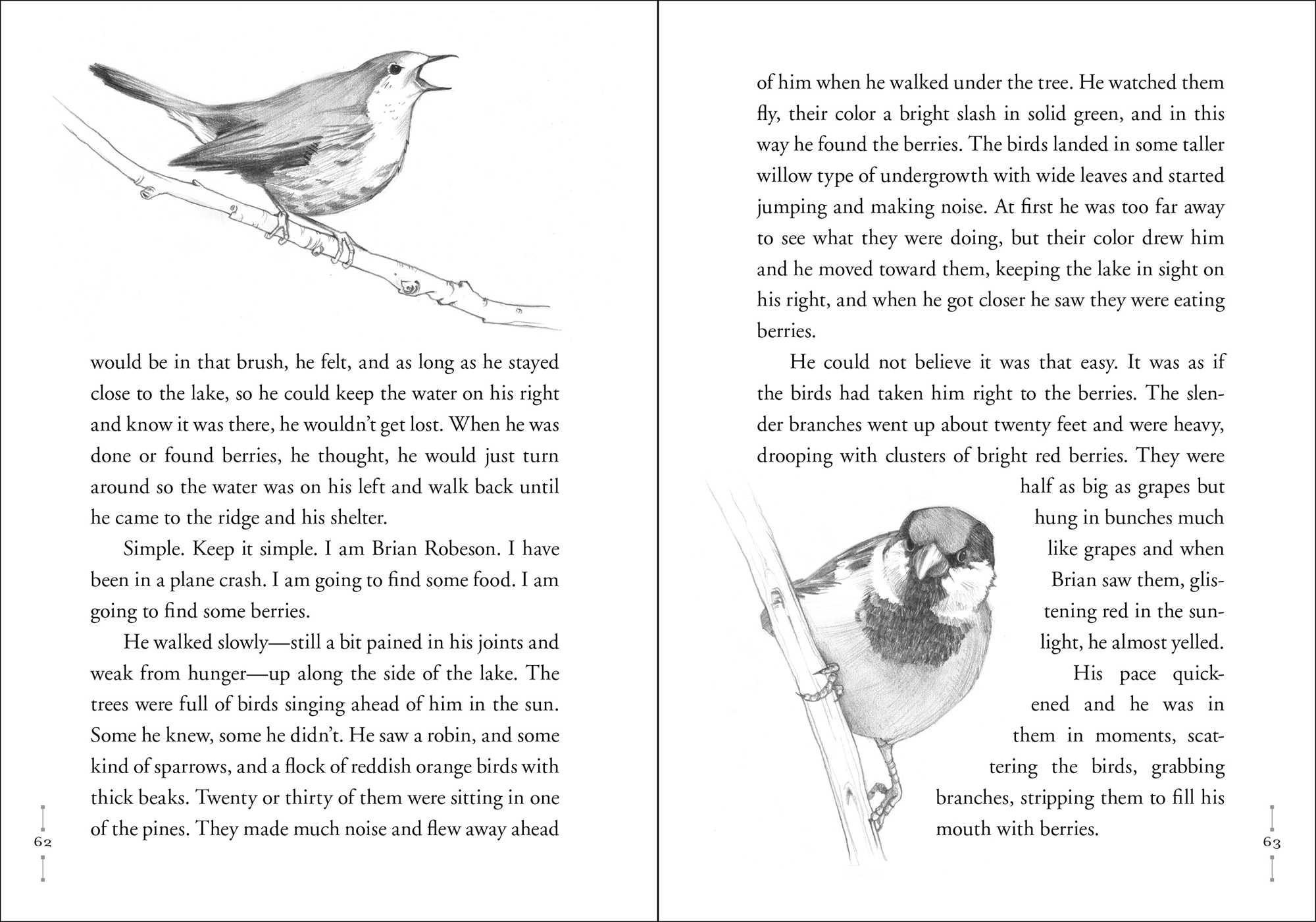 Hatchet Book By Gary Paulsen Drew Willis Official