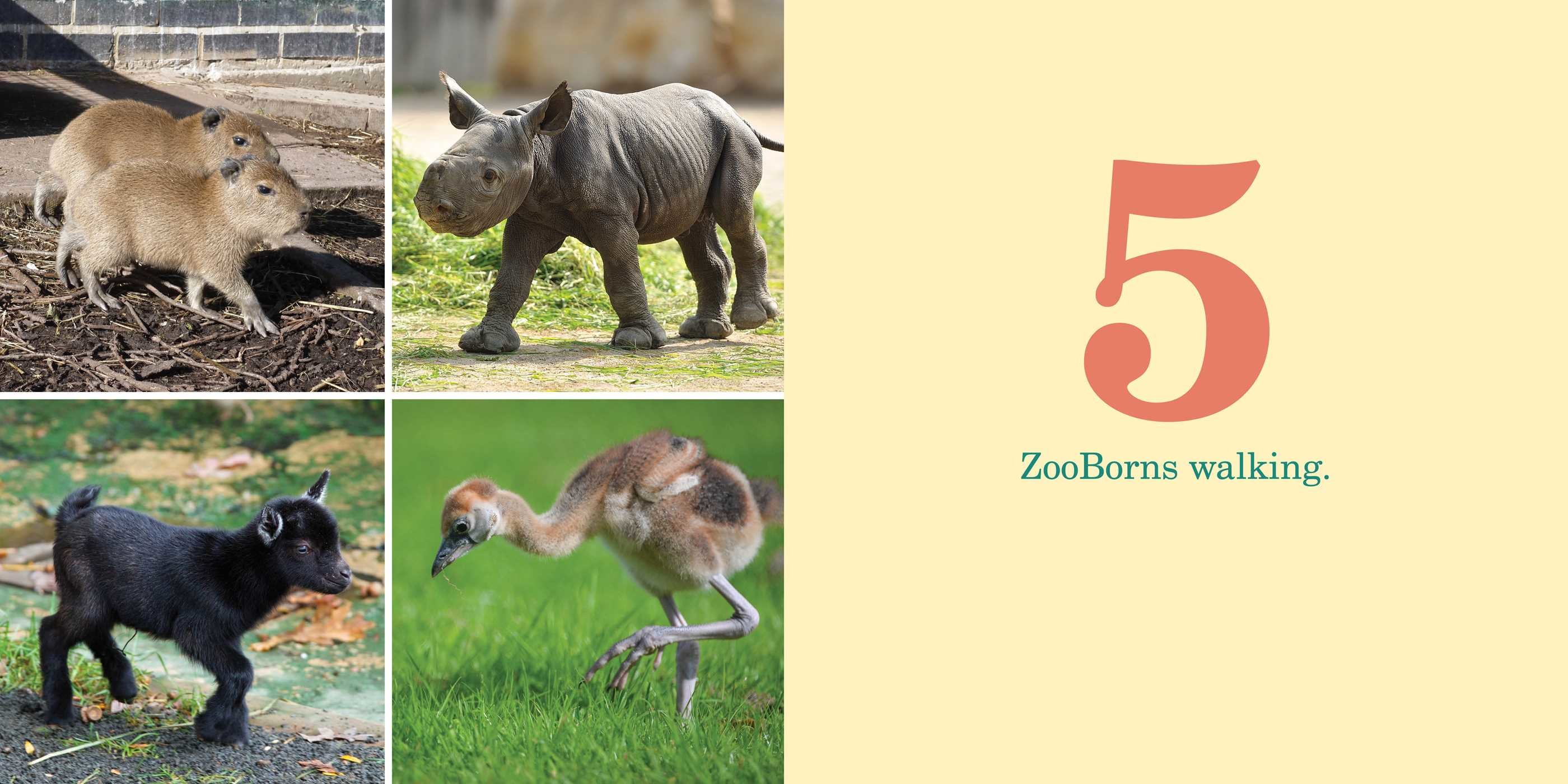 1 2 3 zooborns 9781481491747.in03
