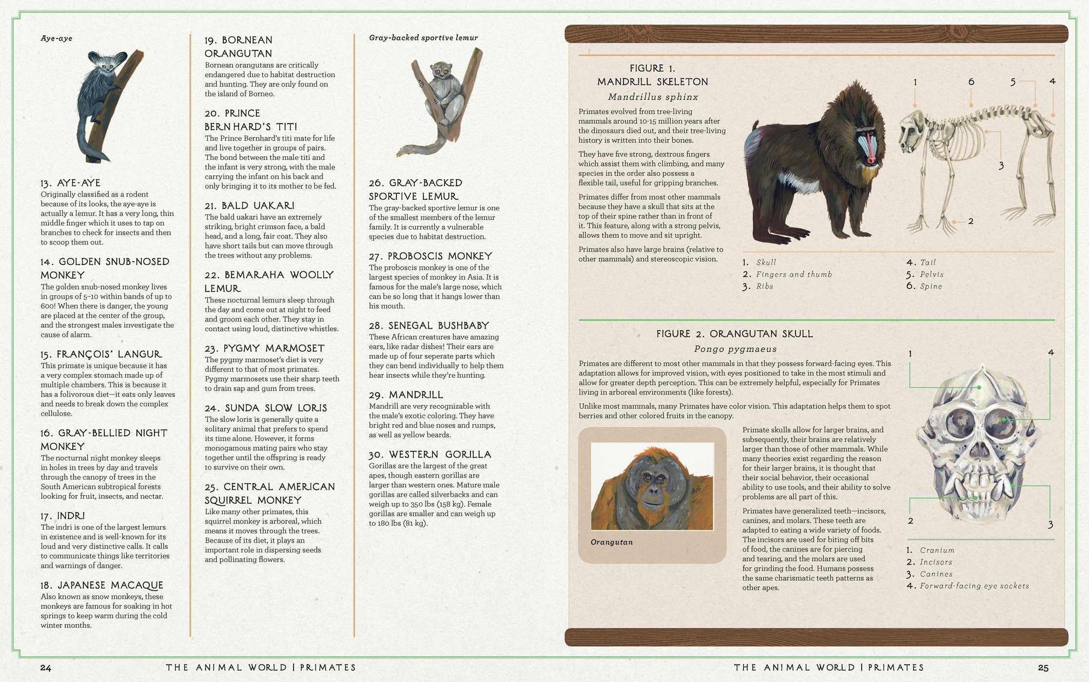 The Animal World | Book by Jules Howard, Kelsey Oseid