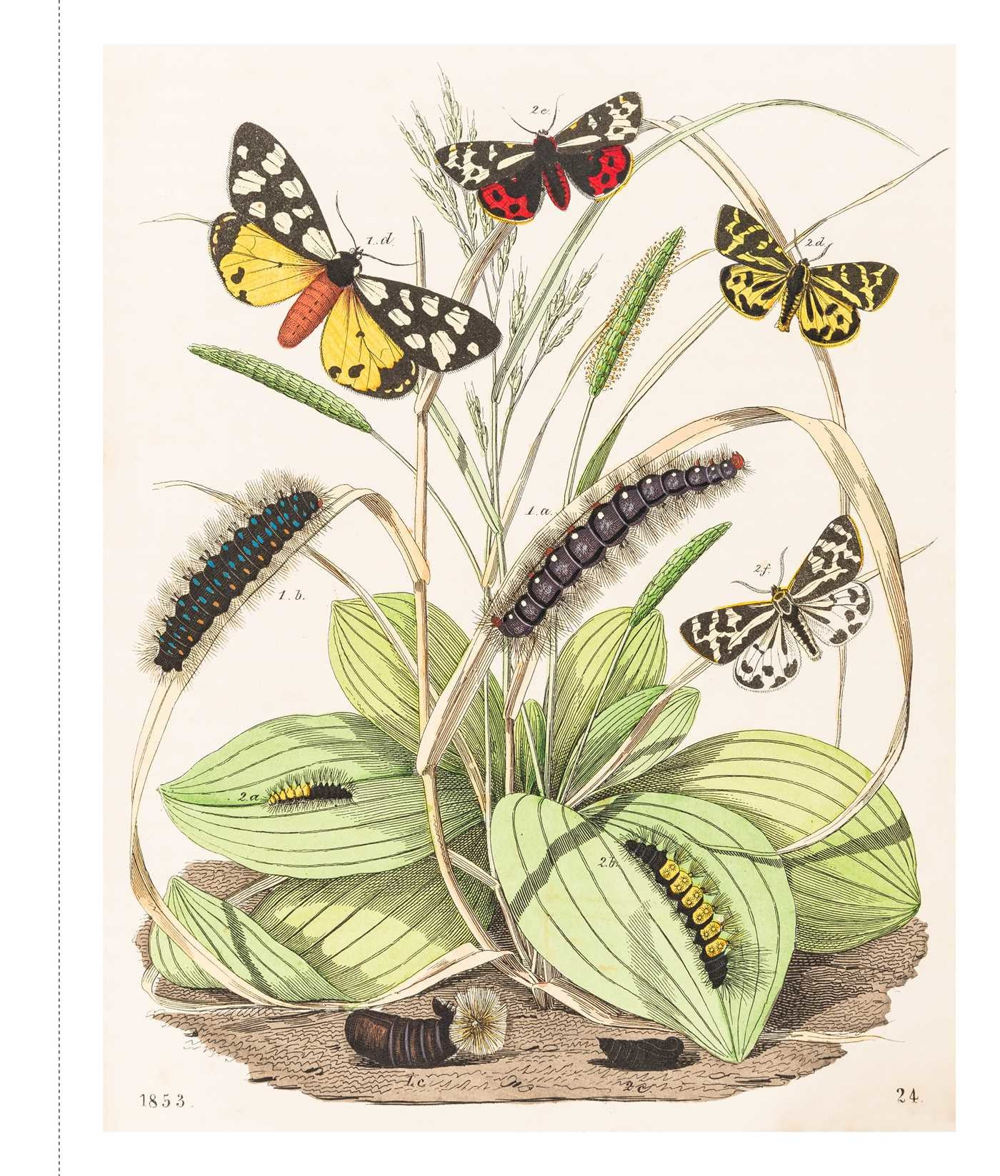 Instant wall art butterfly botanical prints 9781507205280.in02