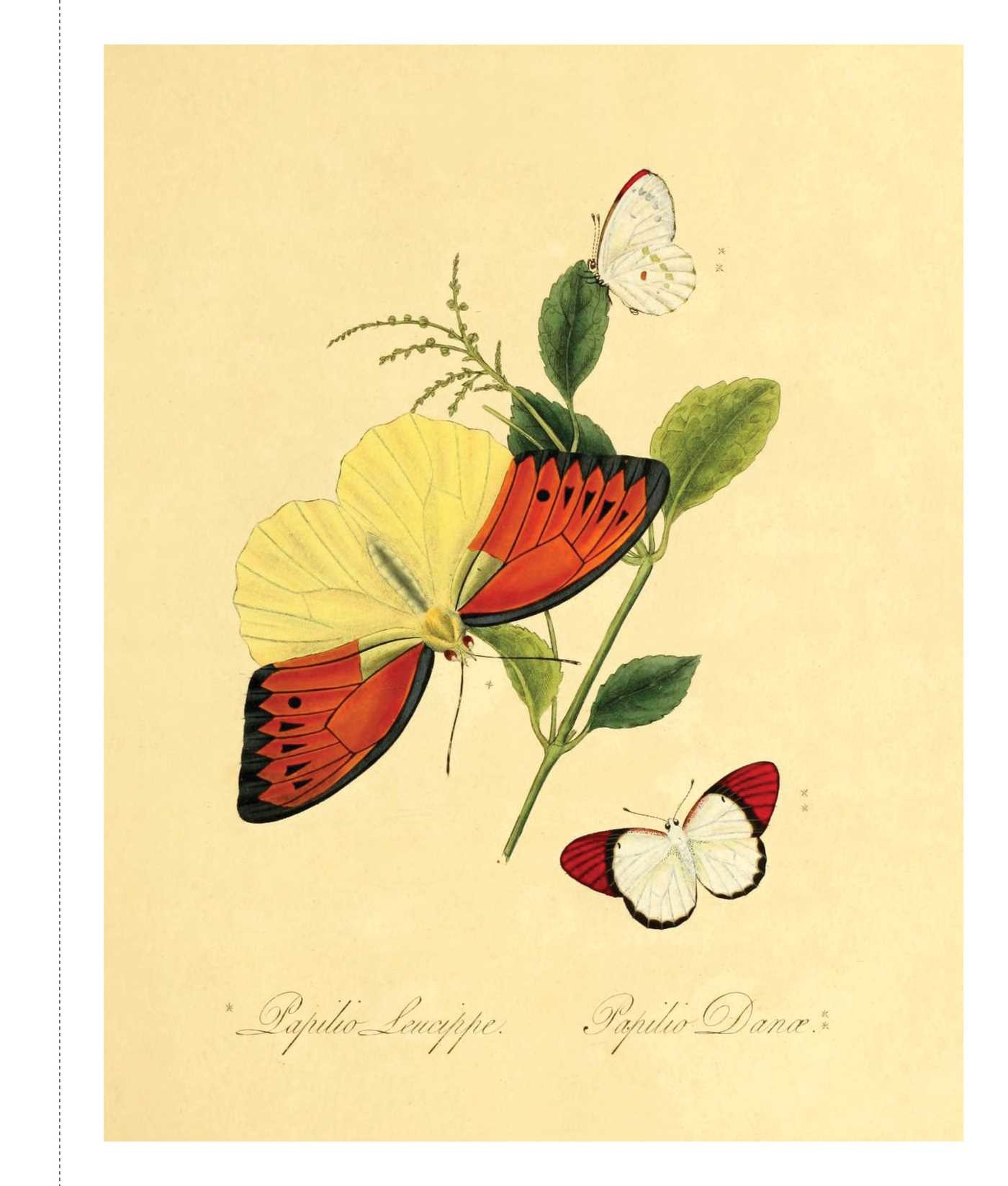 Instant Wall Art - Butterfly Botanical Prints | Book by Adams Media ...
