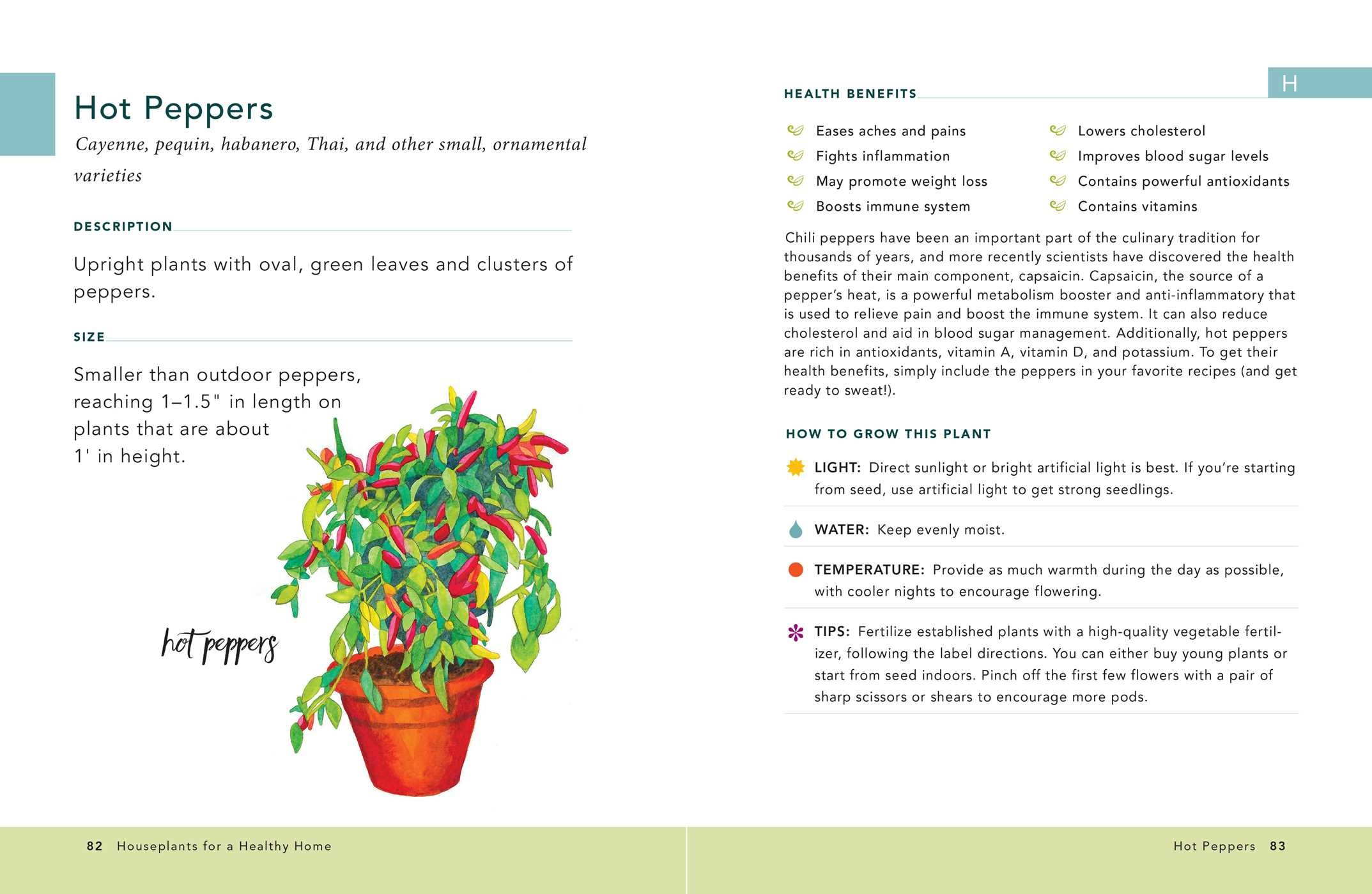 Houseplants for a healthy home 9781507207291.in01