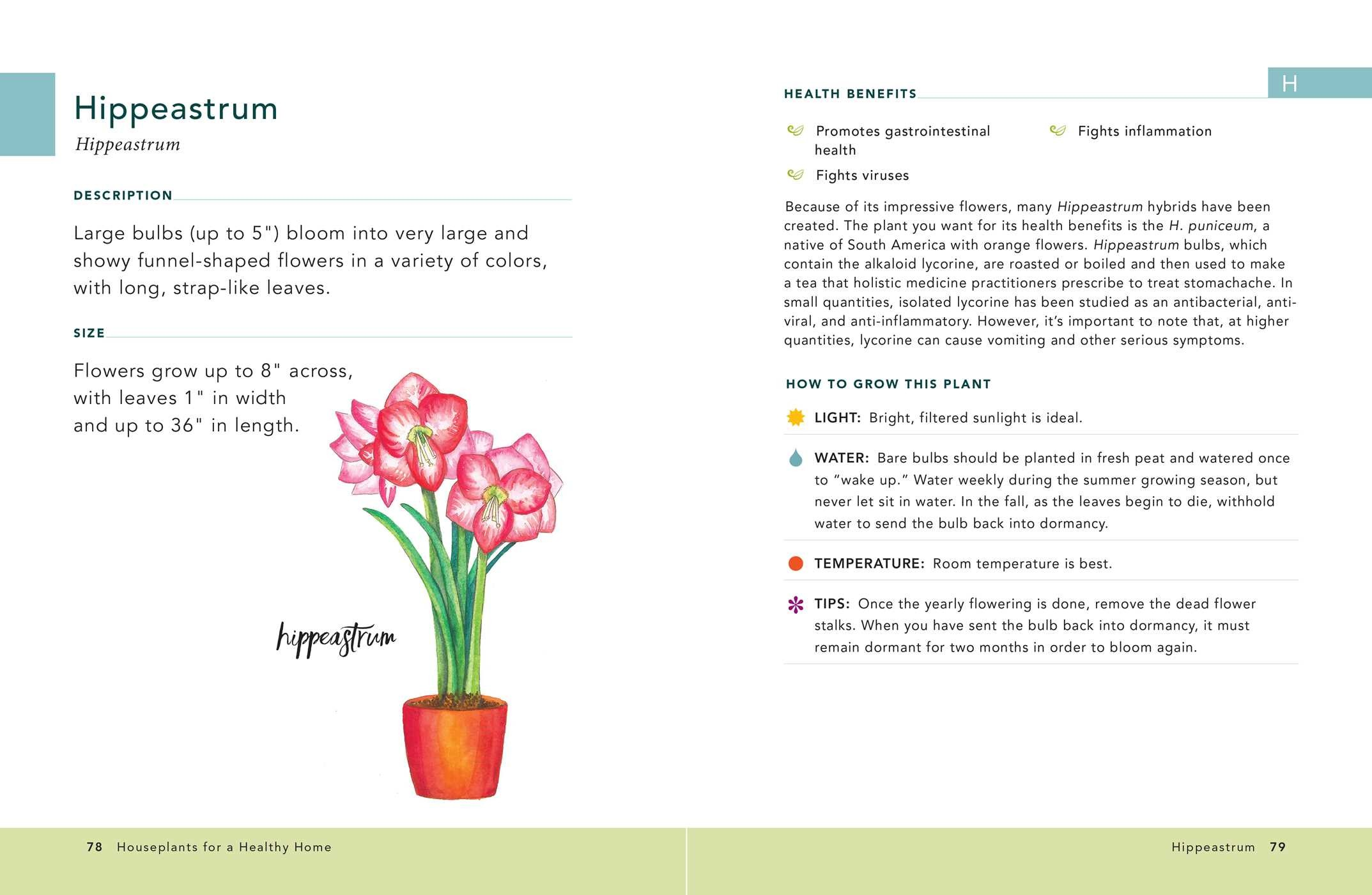 Houseplants for a healthy home 9781507207291.in02