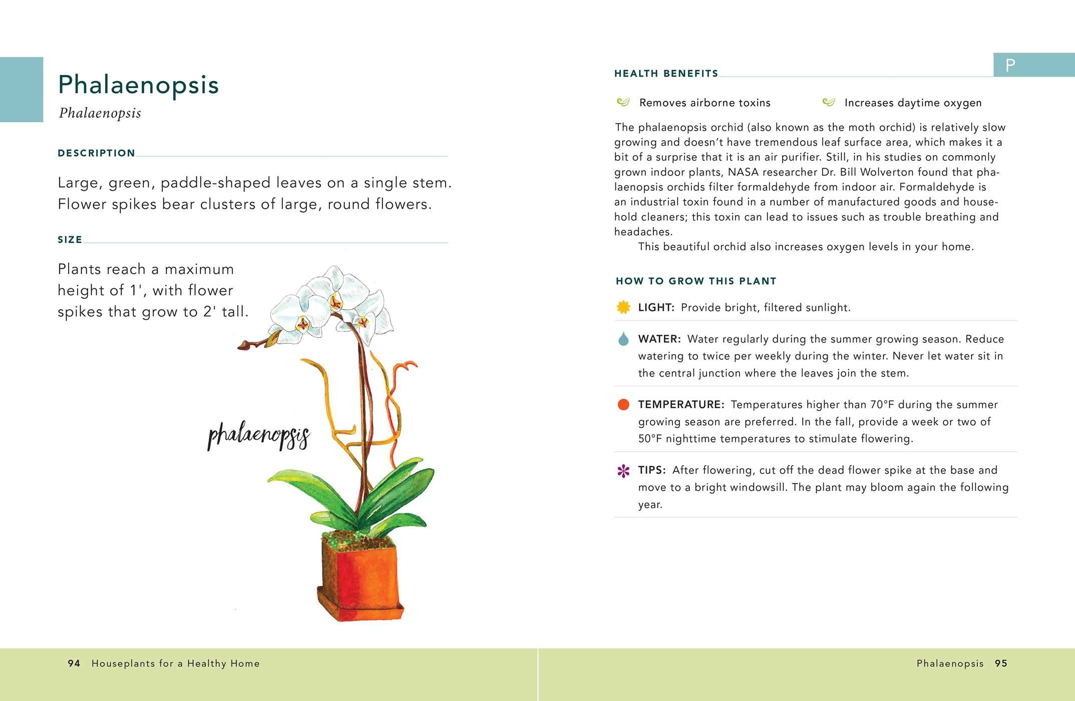 Houseplants for a healthy home 9781507207291.in03