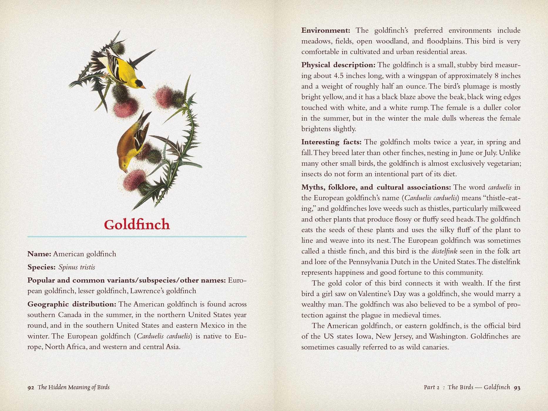 The Hidden Meaning of Birds--A Spiritual Field Guide | Book