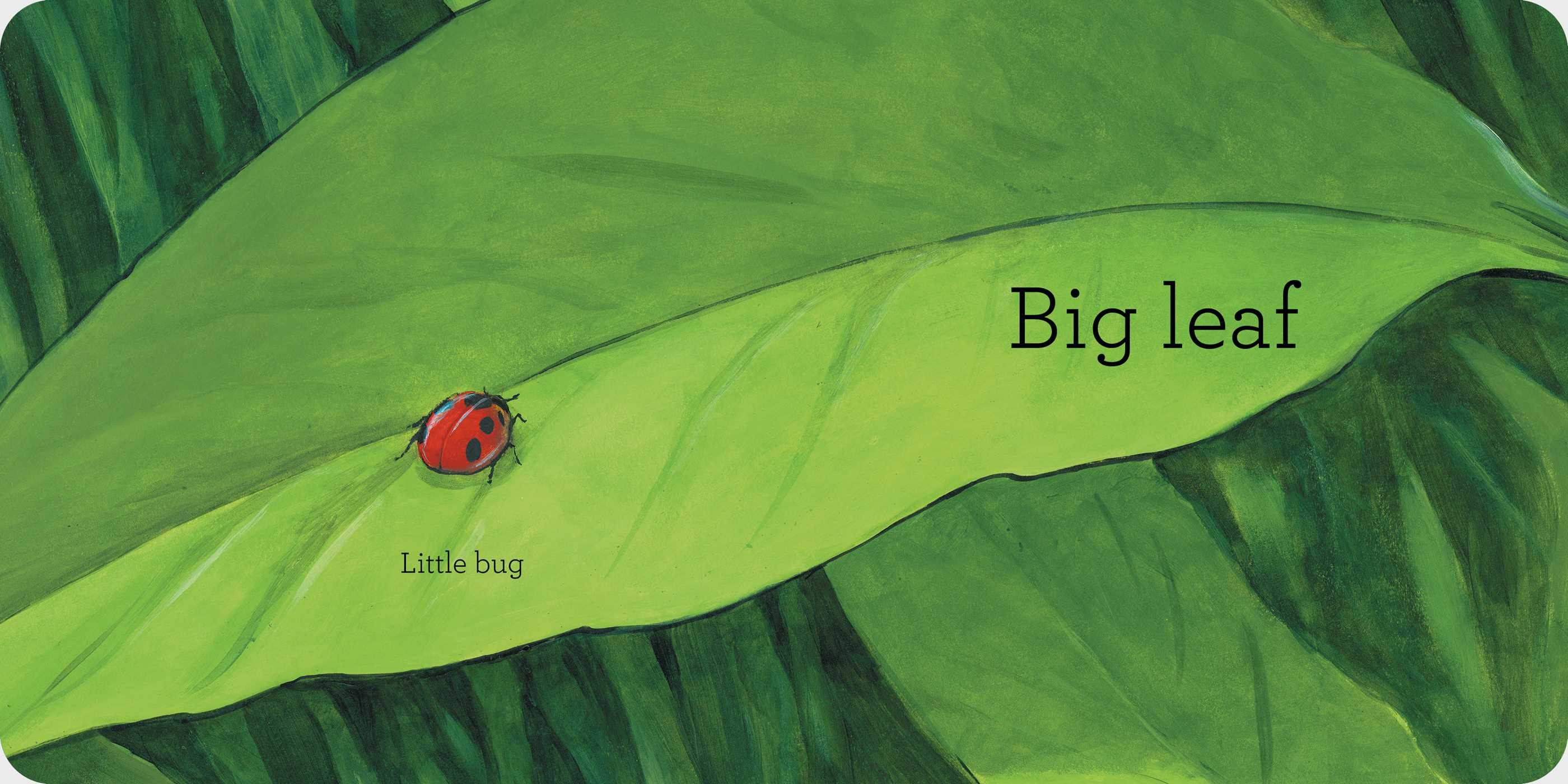 Big bug 9781534416901.in01