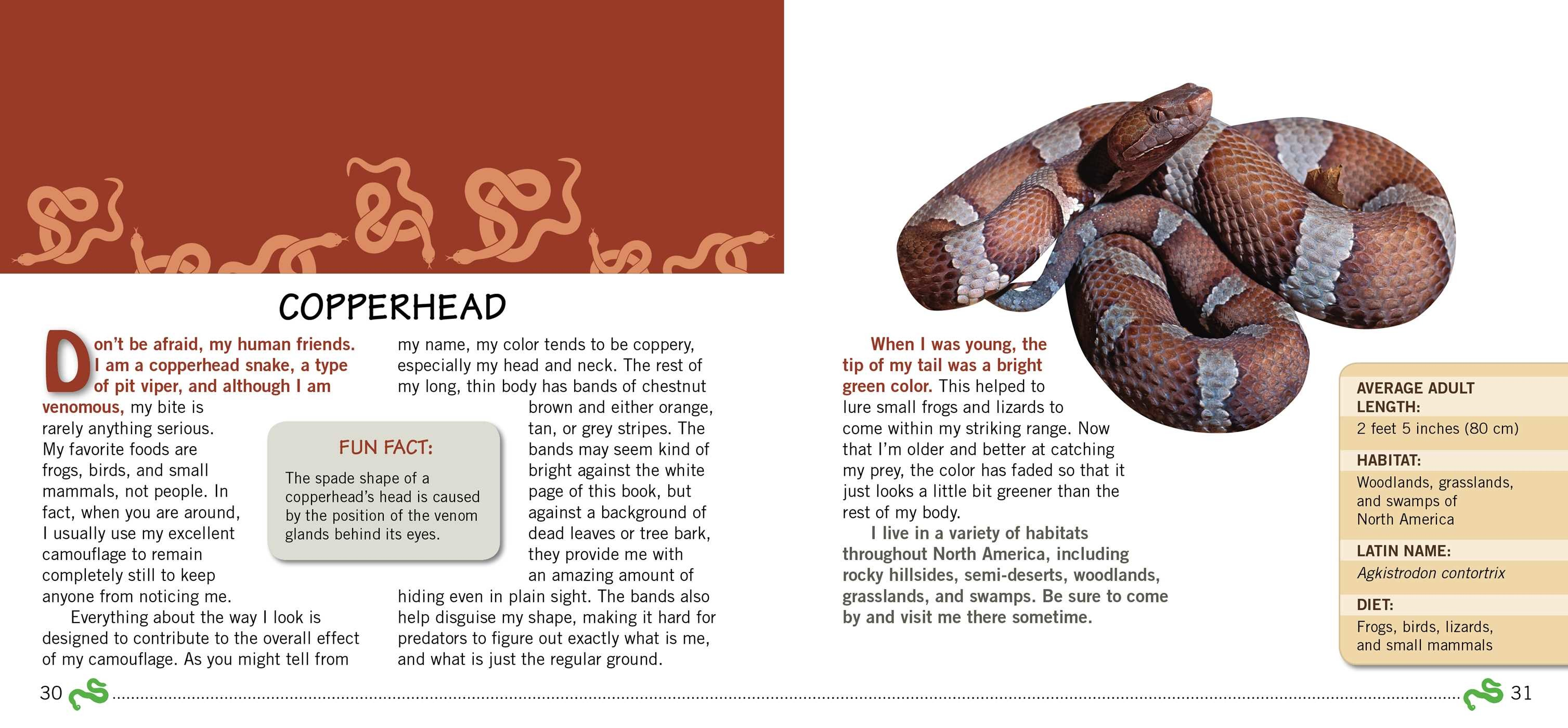 Kids Meet the Snakes | Book by Andra Serlin Abramson