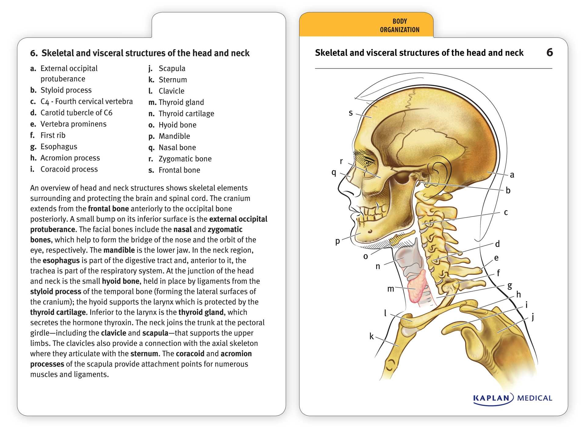 Anatomy Coloring Book Flash Cards | Coloring Pages