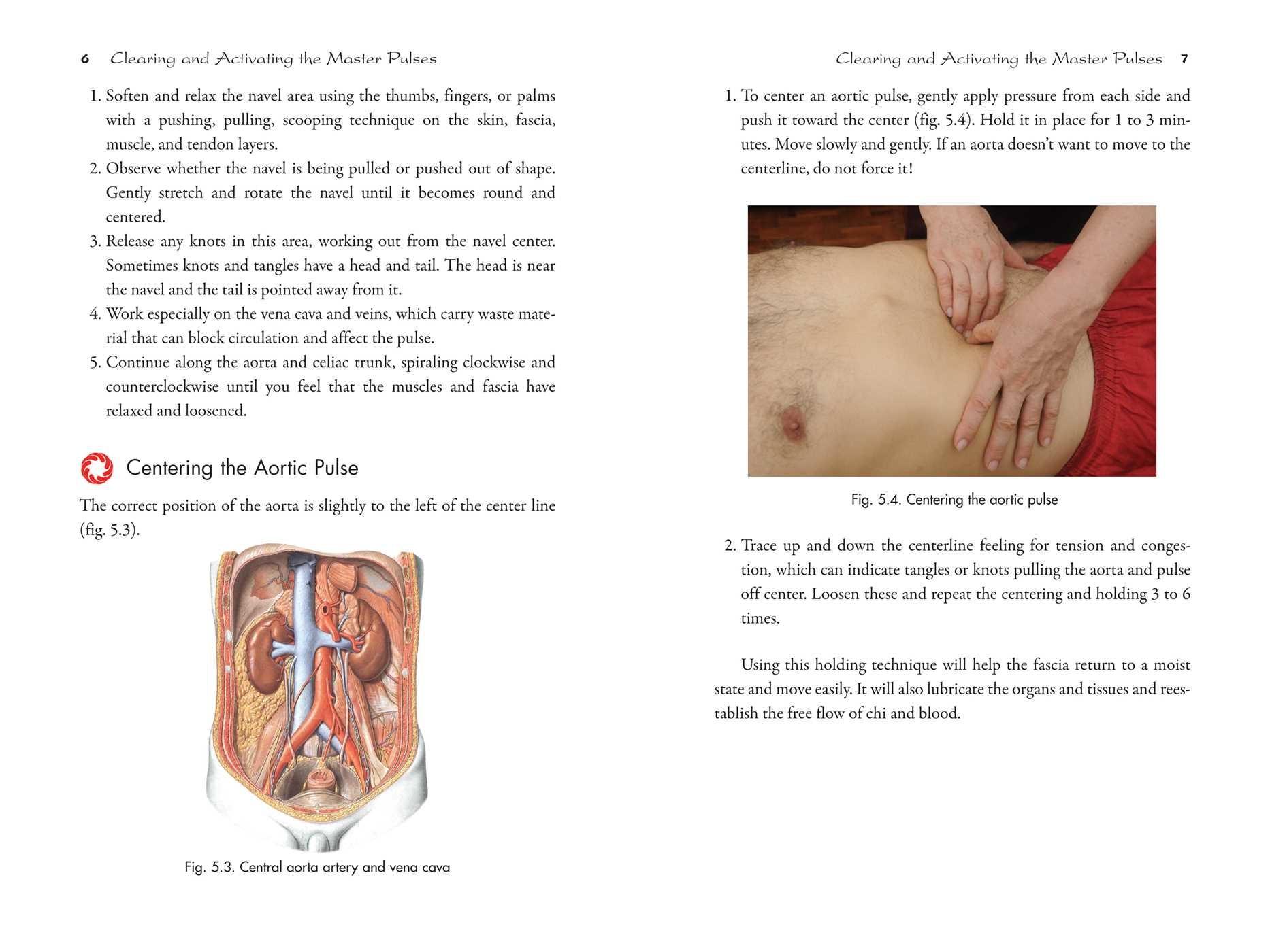Berühmt Aorta Anatomie äste Bilder - Anatomie Von Menschlichen ...