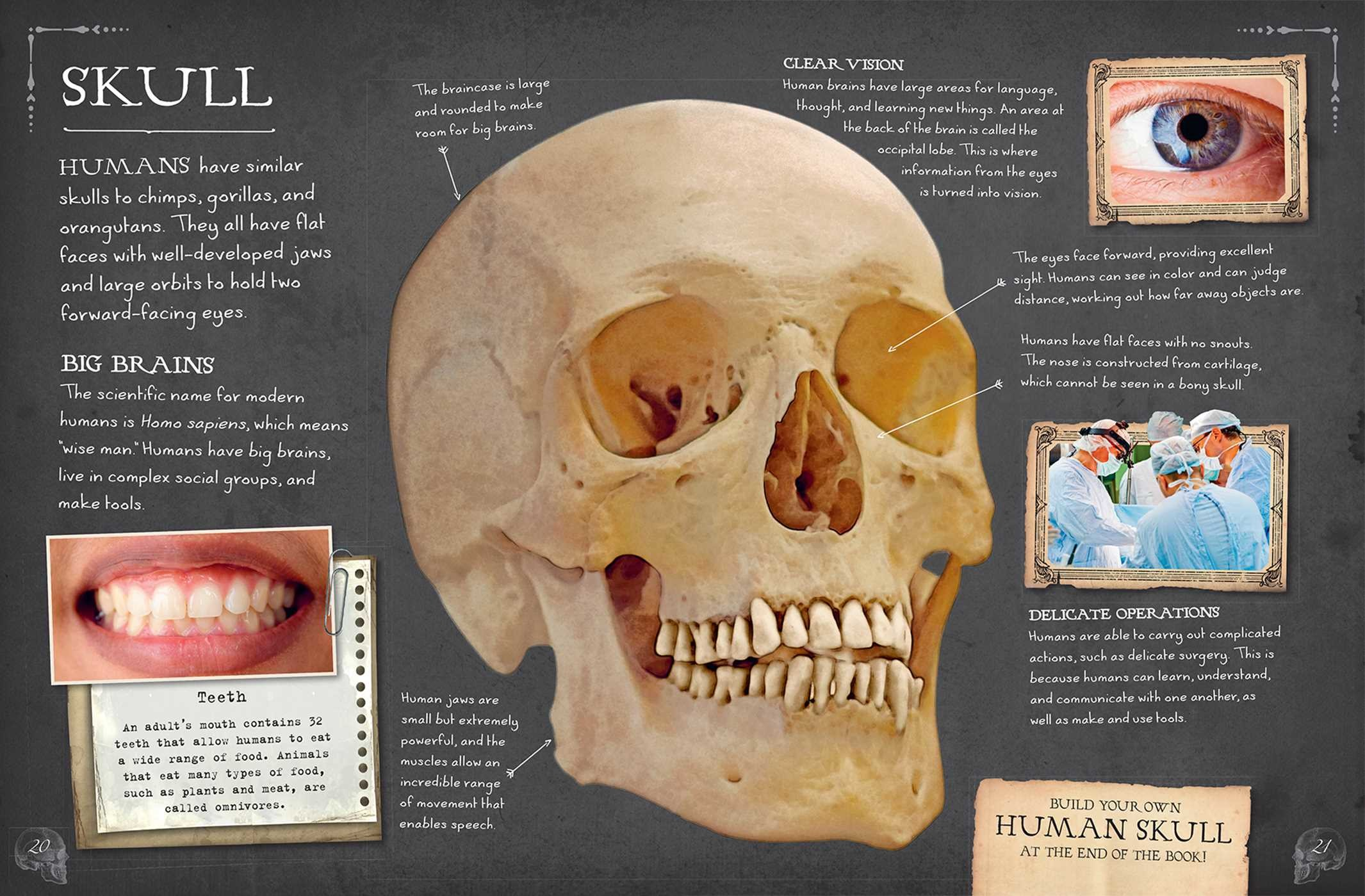 Bone Collection Human Body Book Summary Video Official