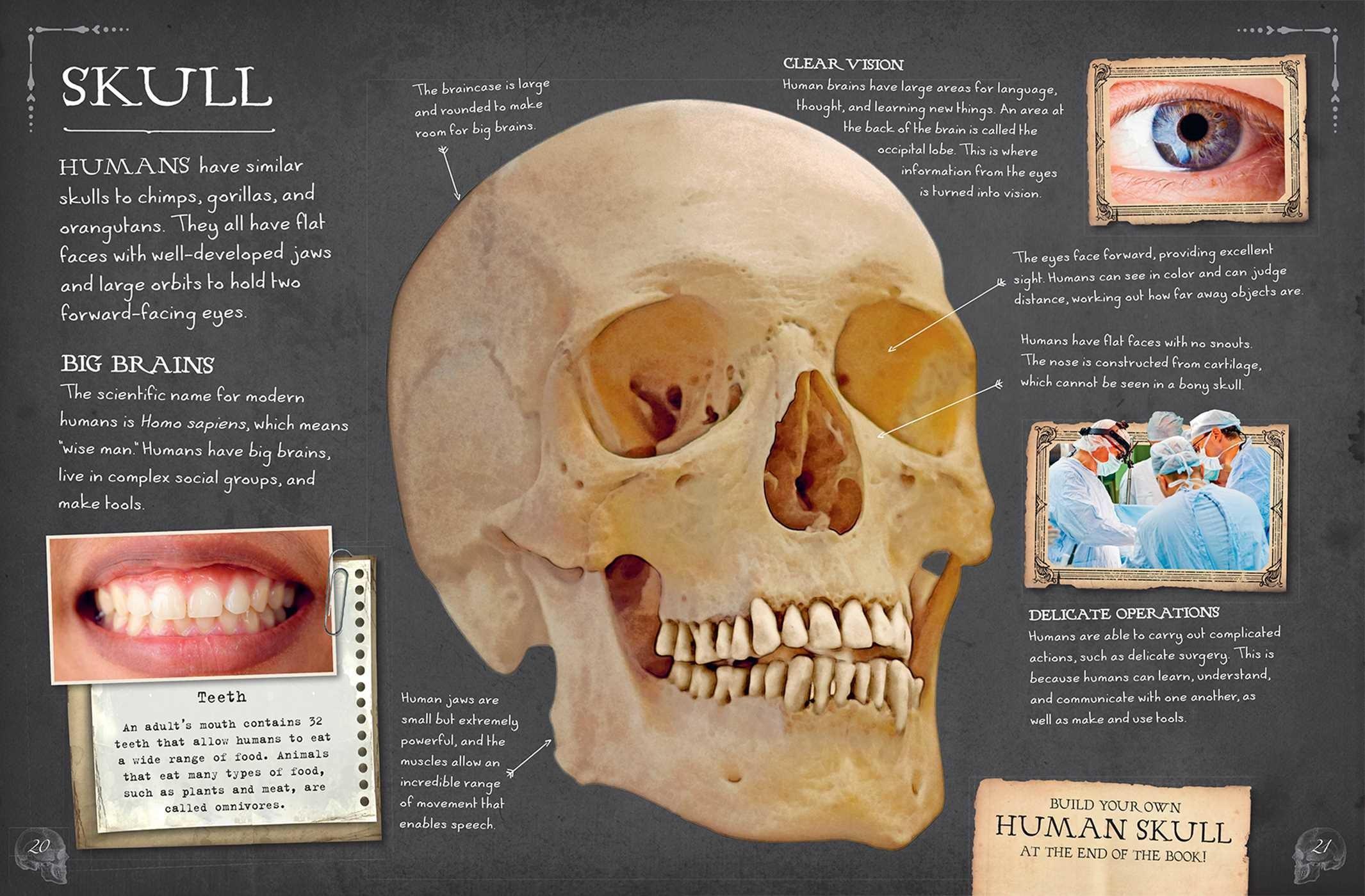 Bone Collection: Human Body - Book Summary & Video