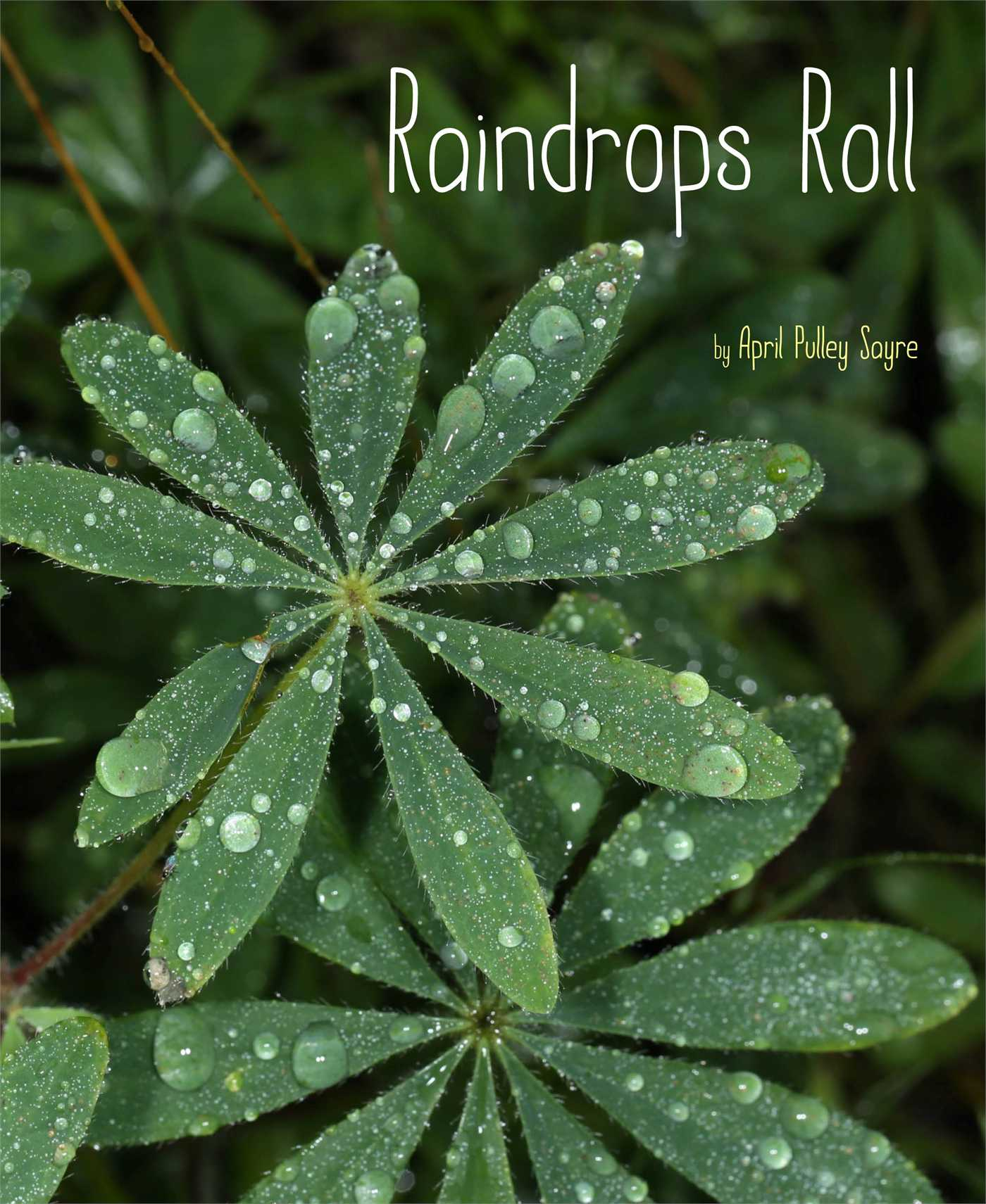 Raindrops roll 9781481420648 hr